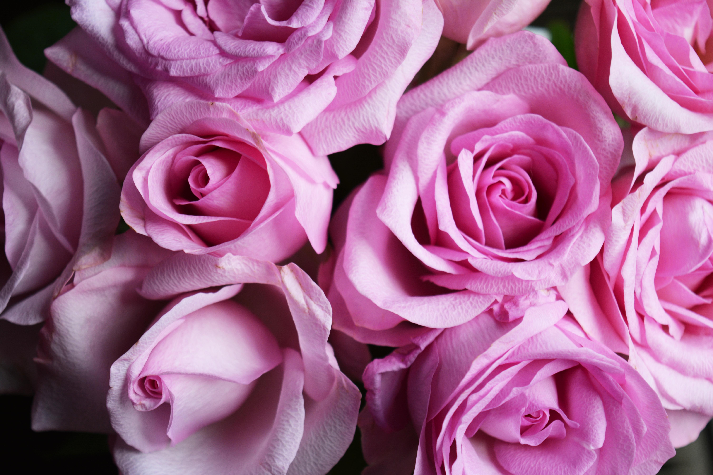 Fotos gratis flor p talo rosado florister a - Cortar hierba alta ...
