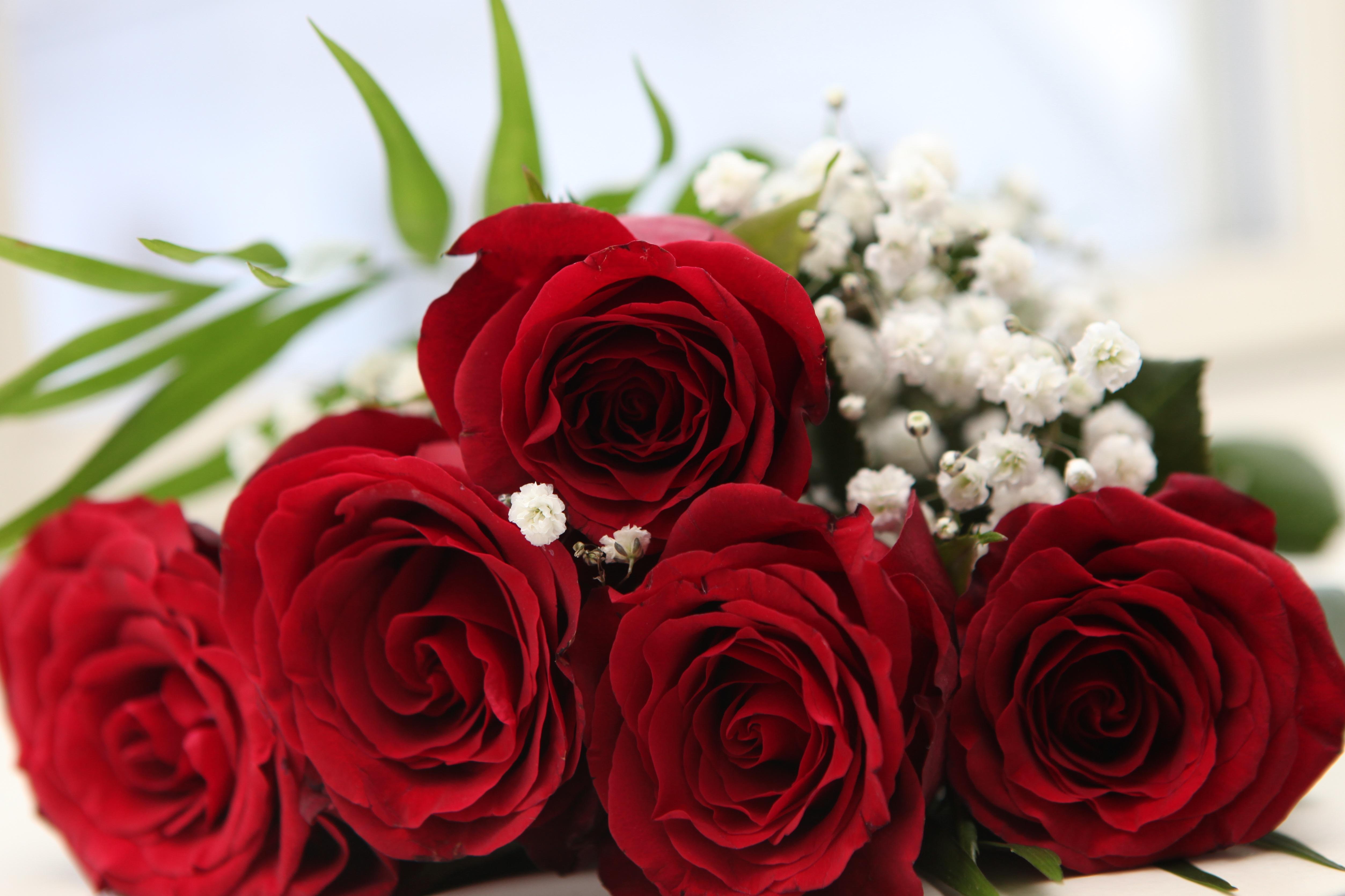 фото цветы для валентины море белой, густой