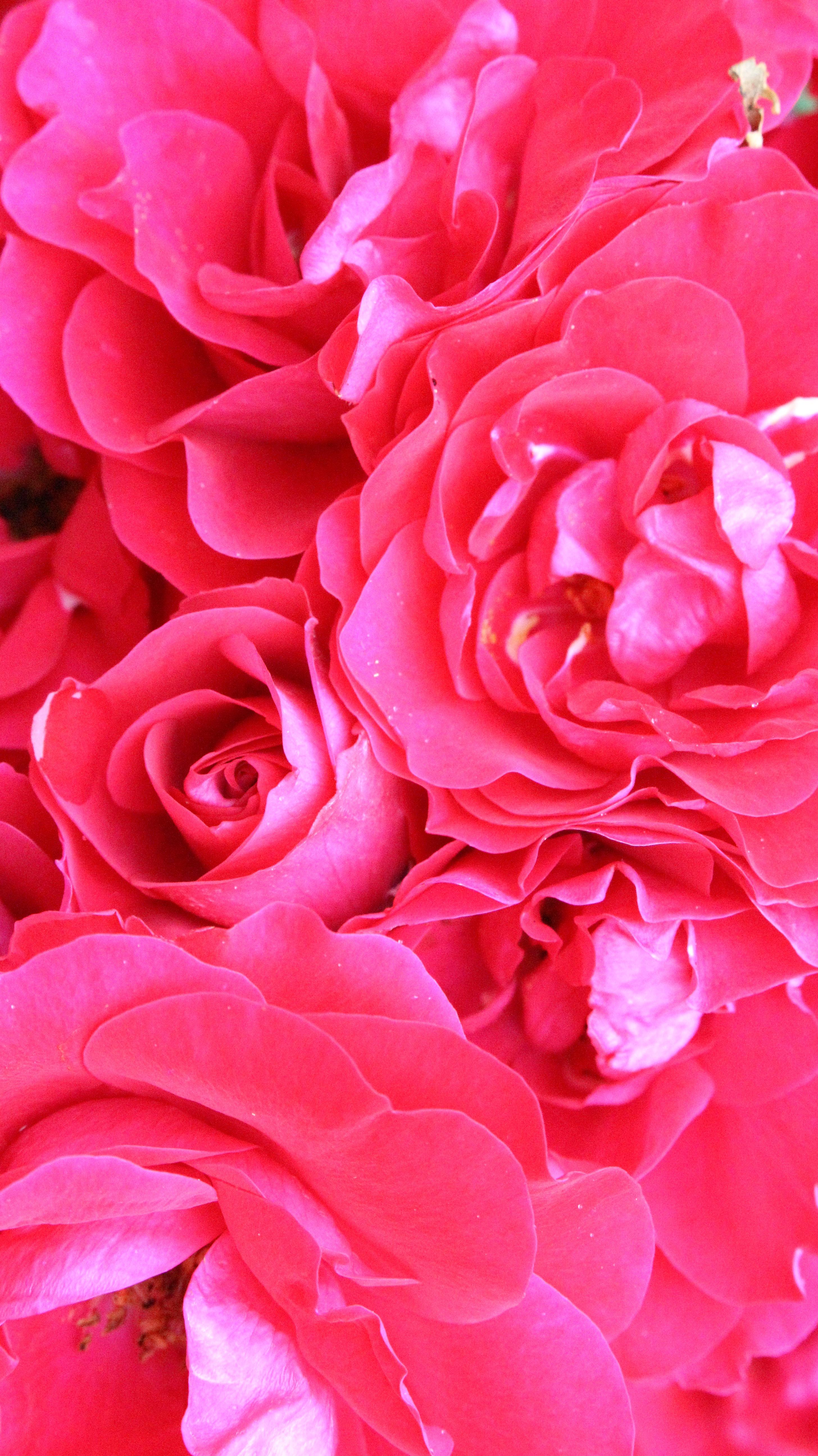 экономичный цветы розовых оттенков картинки времени было уделено