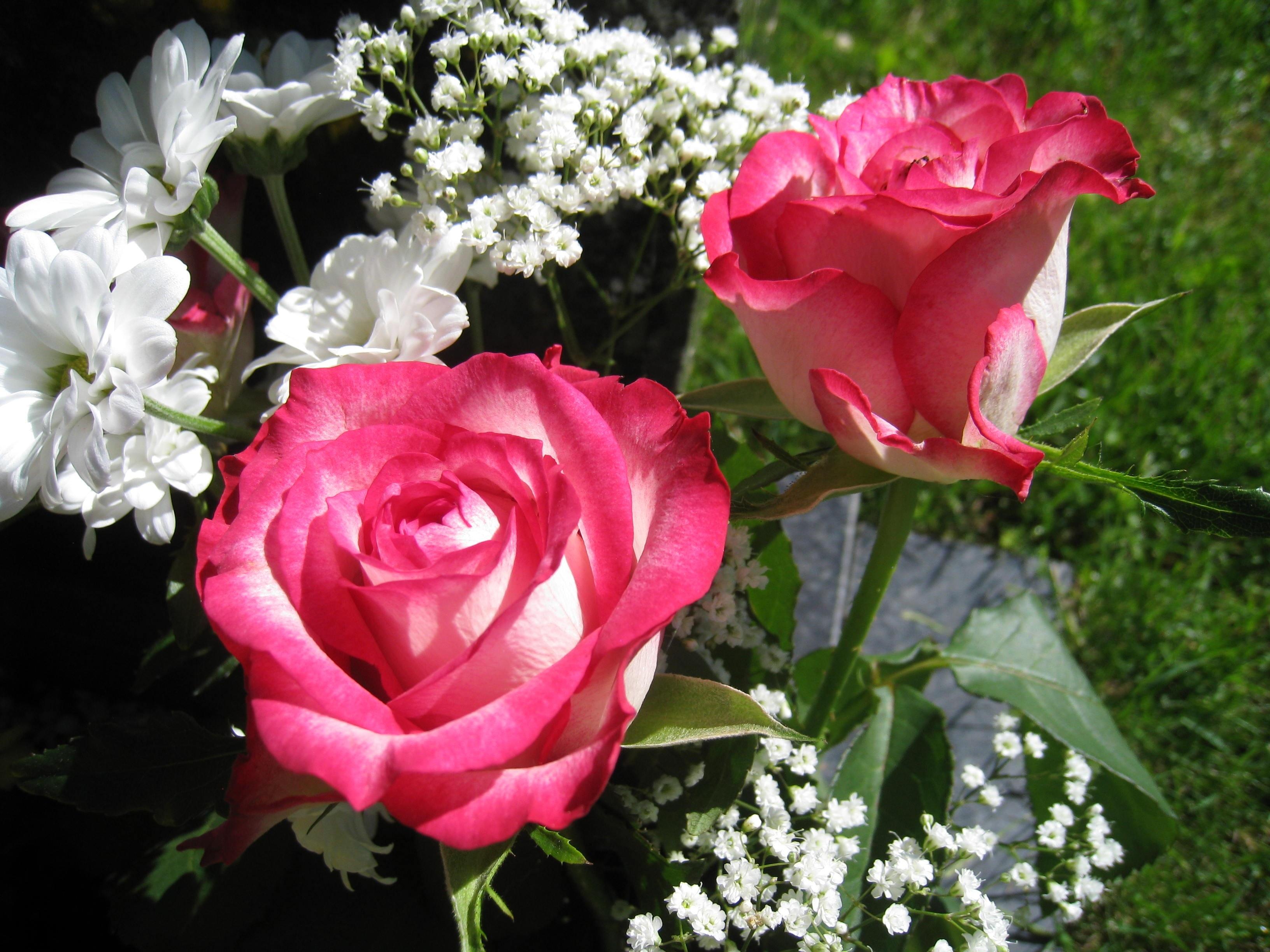 функция этих покажите новые розы фото послушно родителям дитя