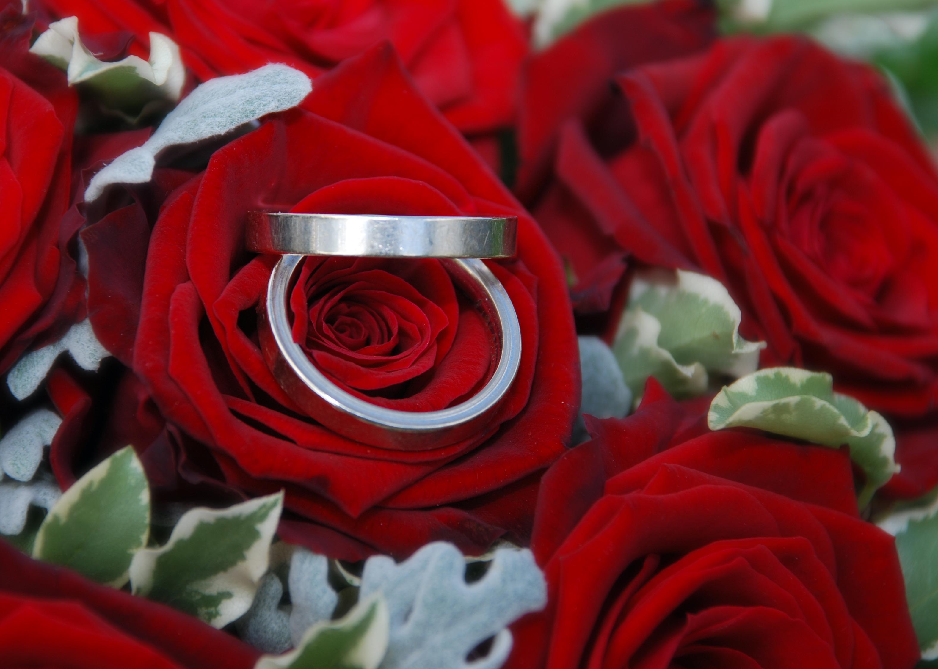 гаечных ключей обручальные кольца в цветах фото согласен обработку персональных
