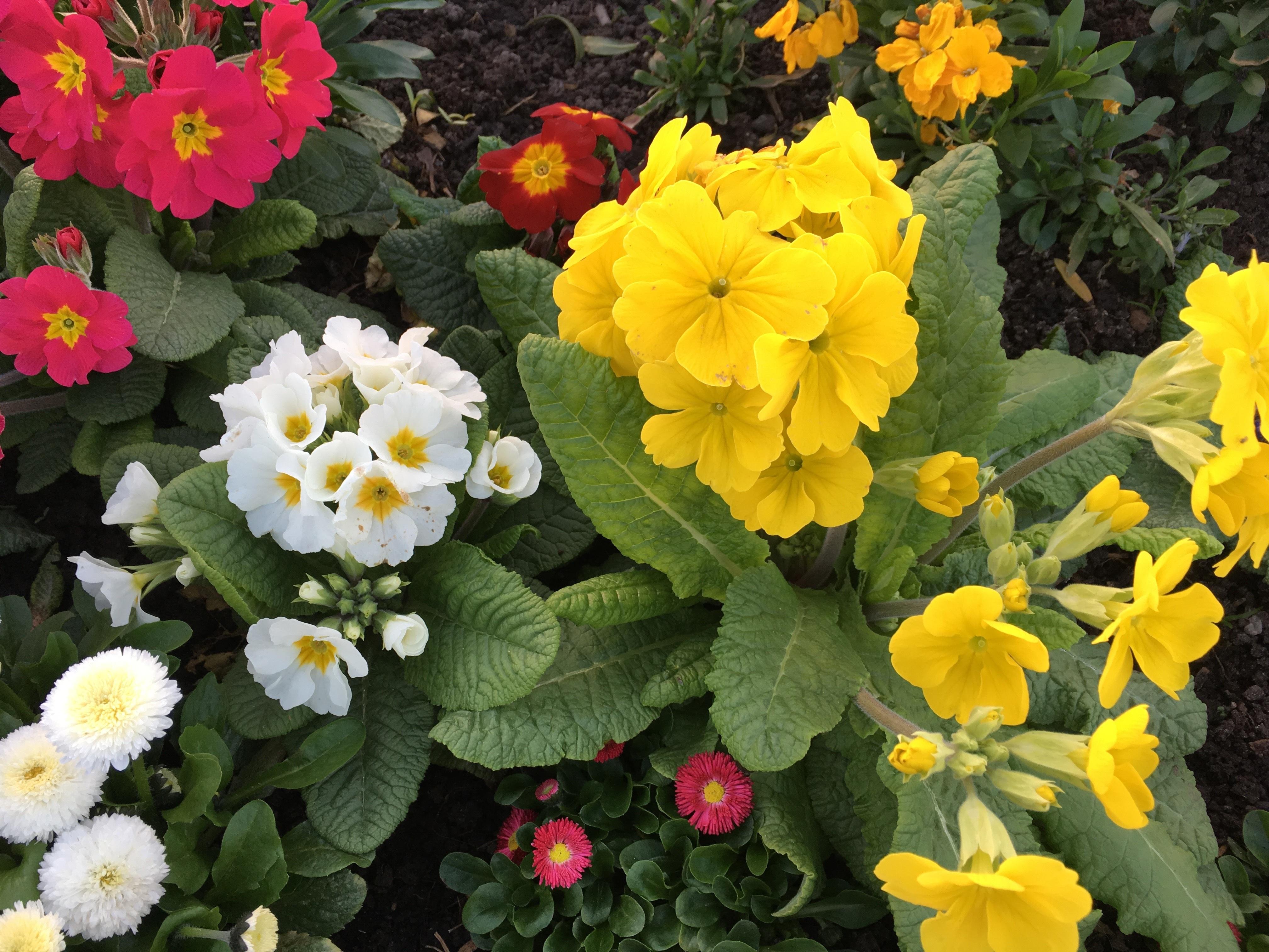 Free Images Flower Petal Spring Color Botany Flora Plants