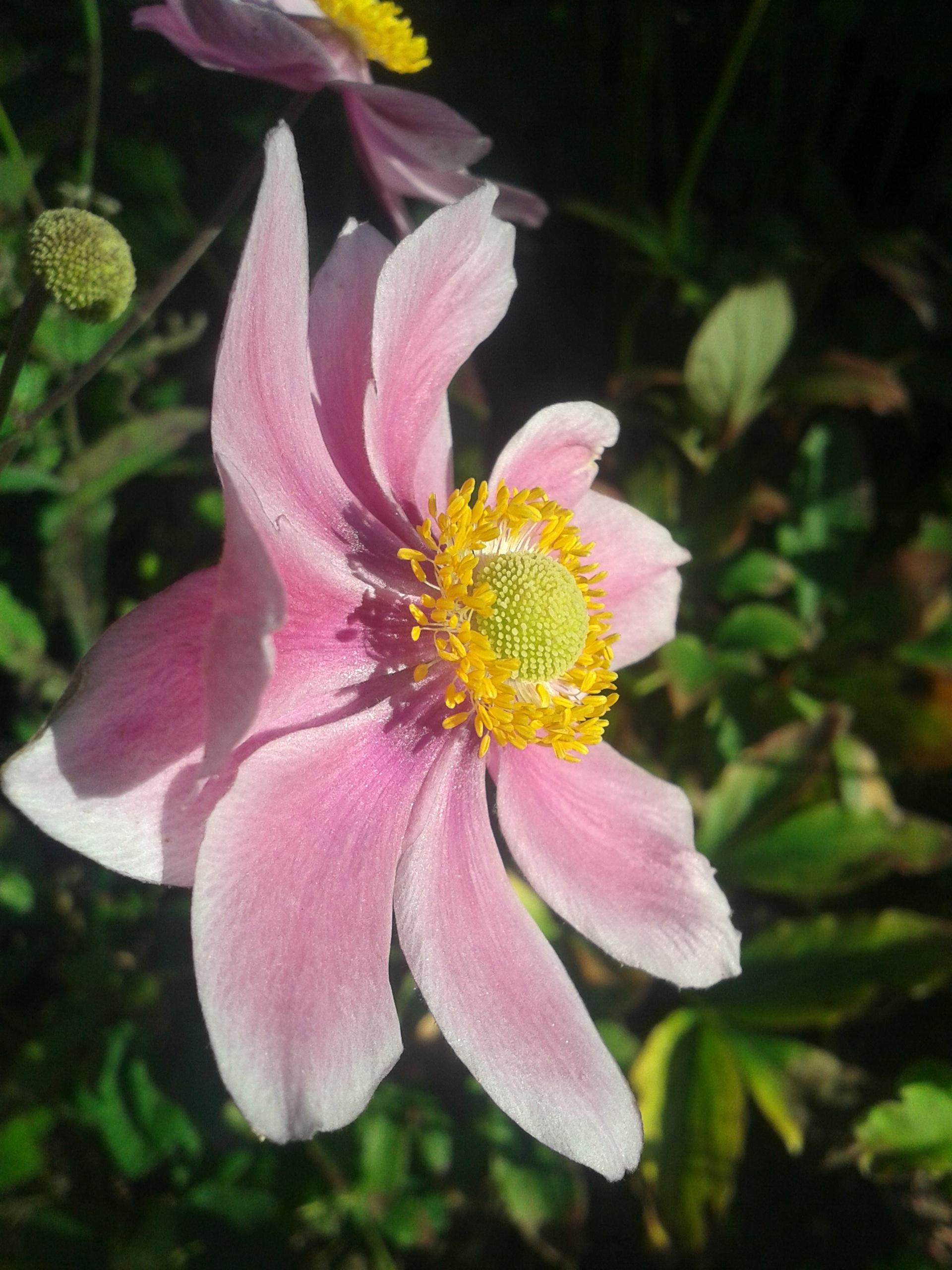 Free Images Flower Petal Drive Botany Flora Plants