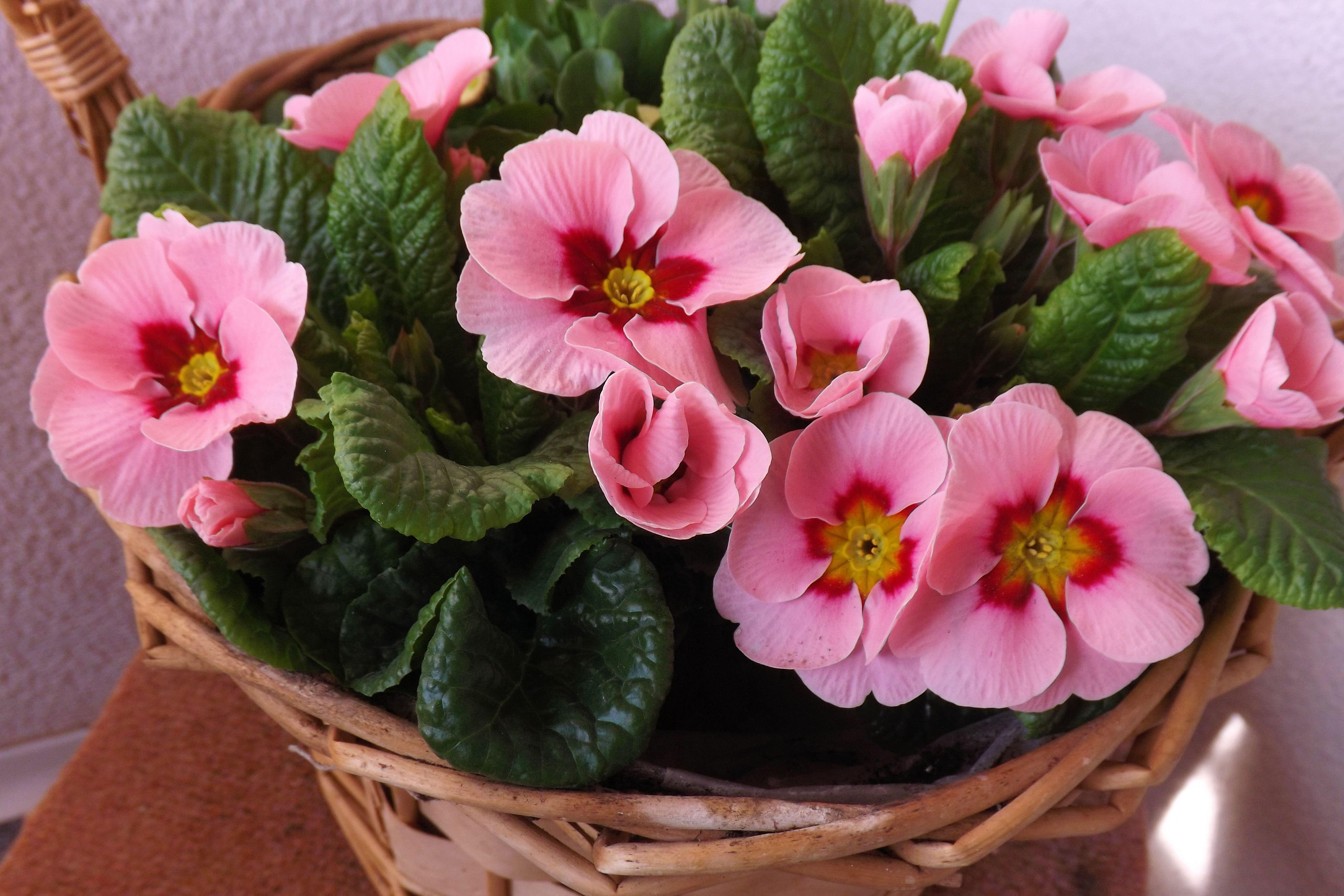 весенние комнатные цветы фото другом форуме