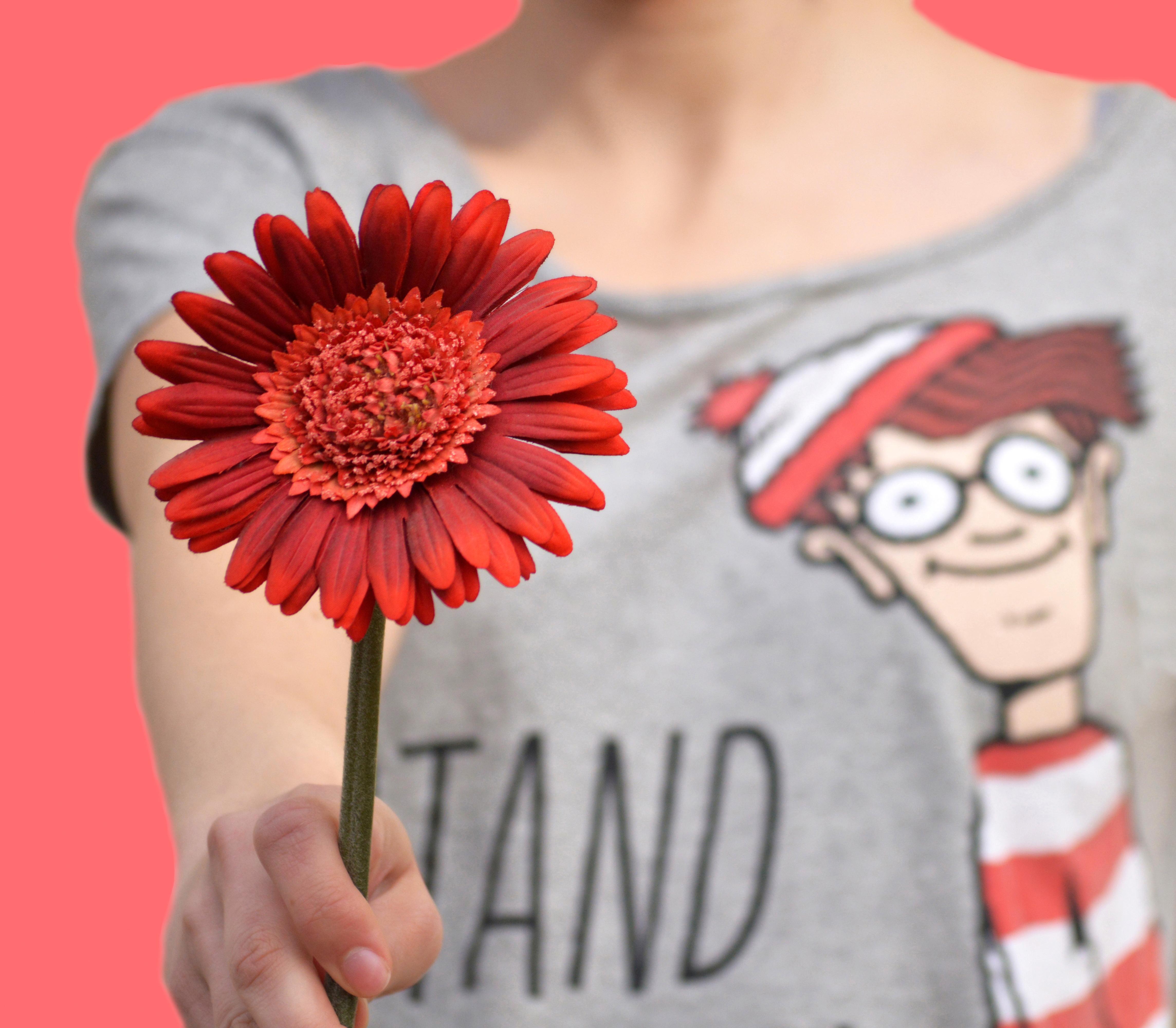 Free Images Flower Petal Spring Red Tshirt Pink Rot Fleur
