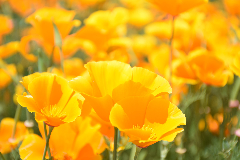 Free Images Petal Spring Flora Wildflower Flower Garden