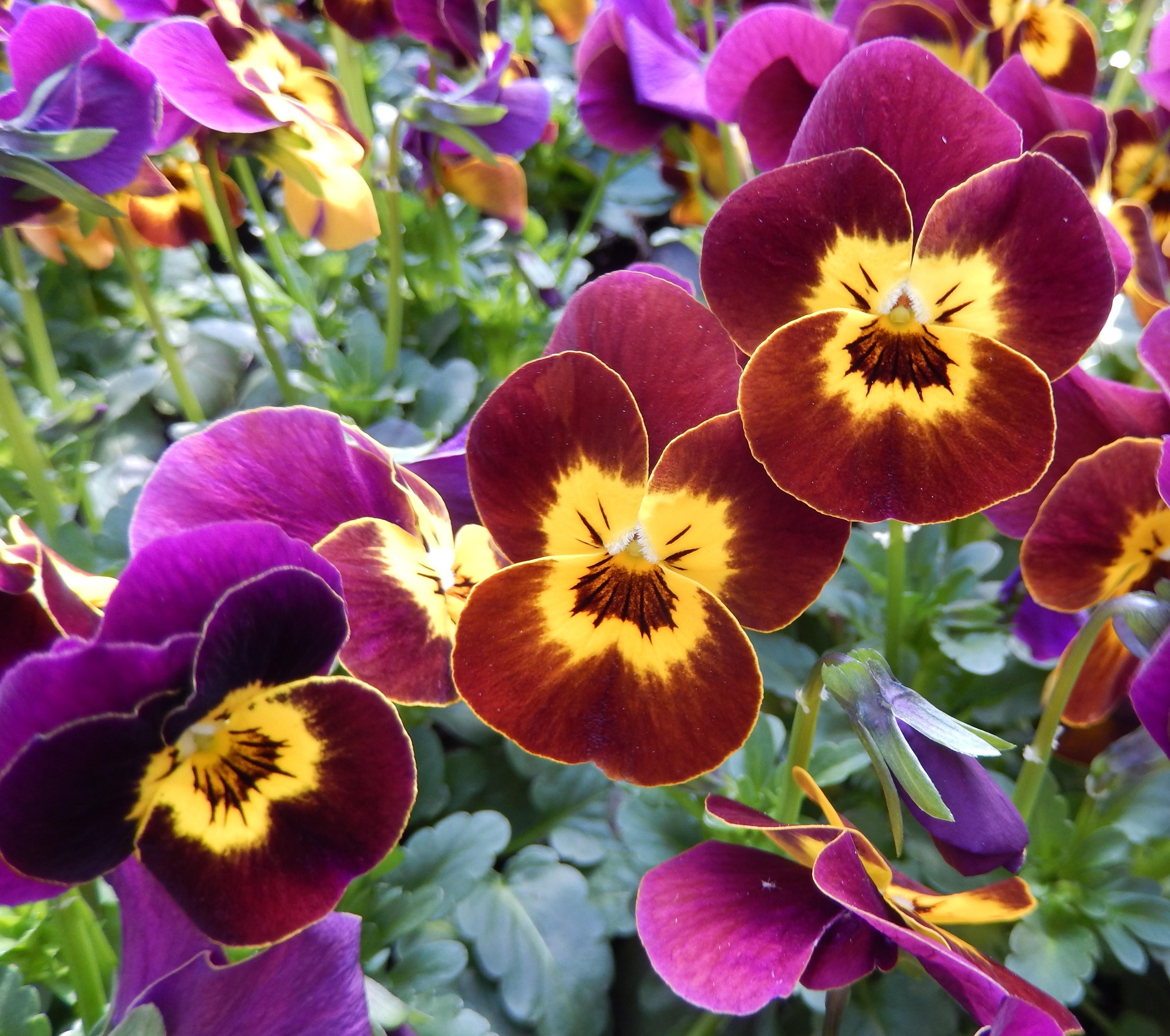 Fotos gratis p talo verano rojo macro bot nica for Plantas que hay en un vivero