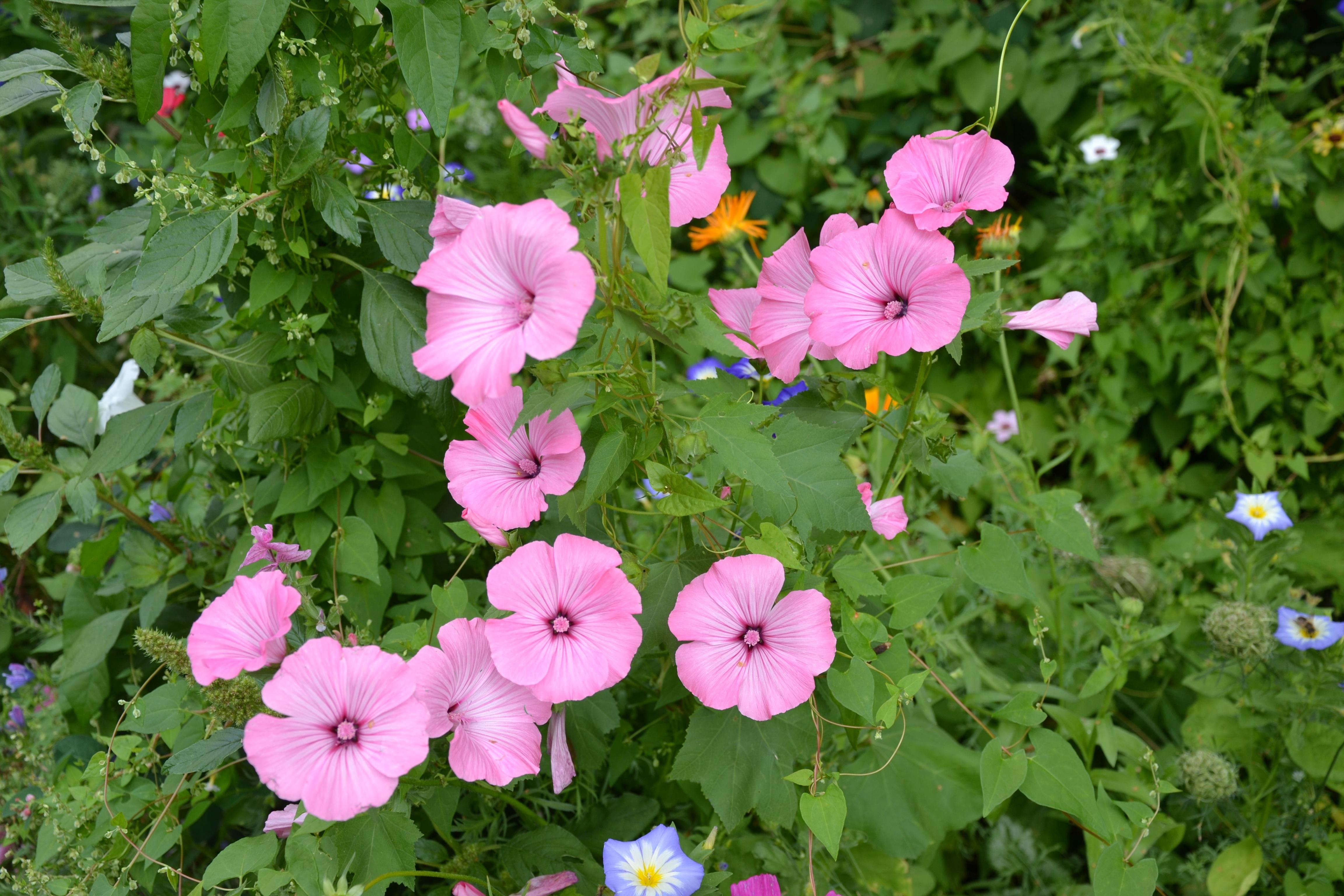 Best variete de fleurs de jardin images for Fleurs de jardin