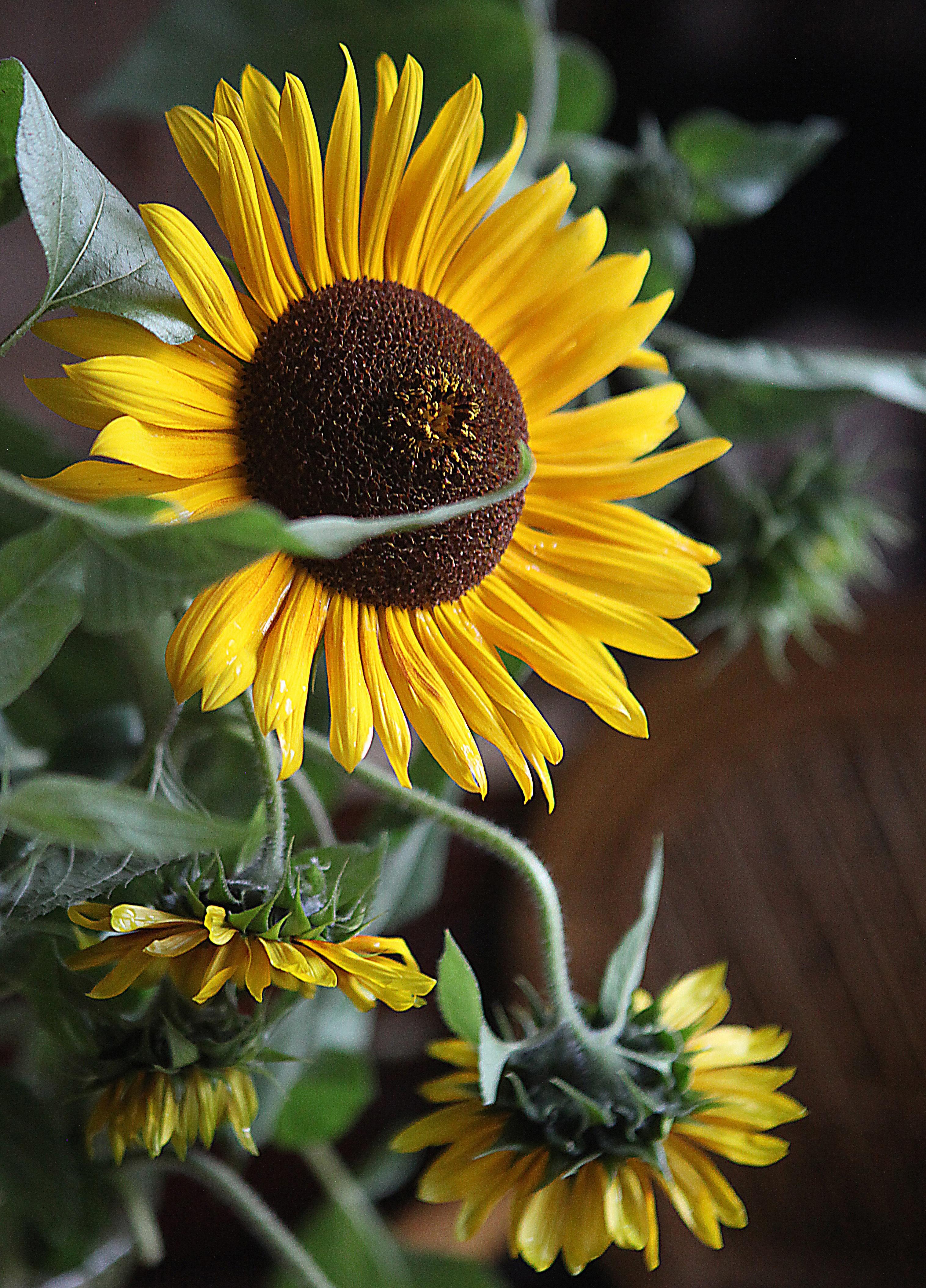 images gratuites p tale t d coration botanique jaune fermer flore ornement fleur. Black Bedroom Furniture Sets. Home Design Ideas
