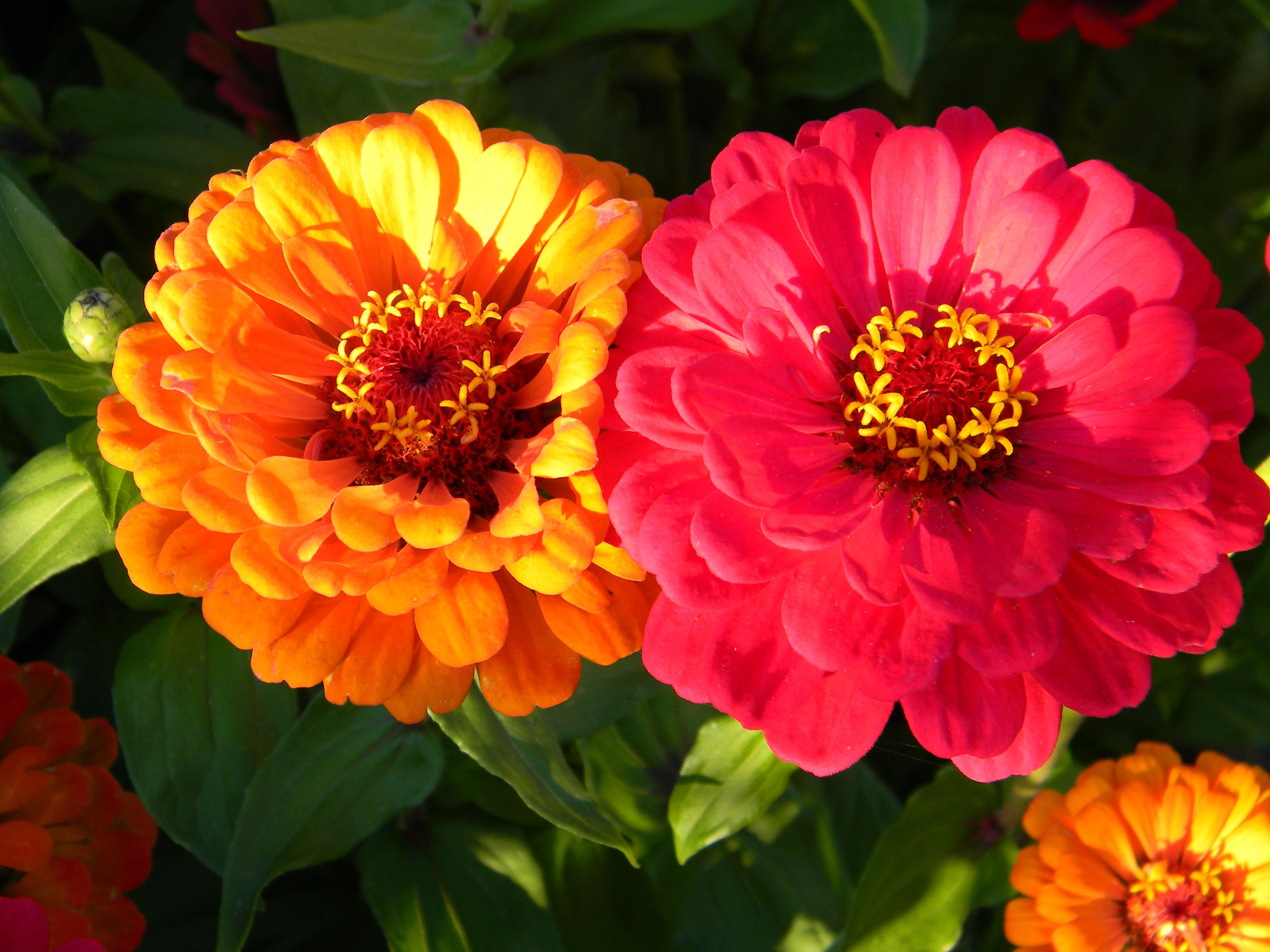Названия садовых цветов цветущих до сентября