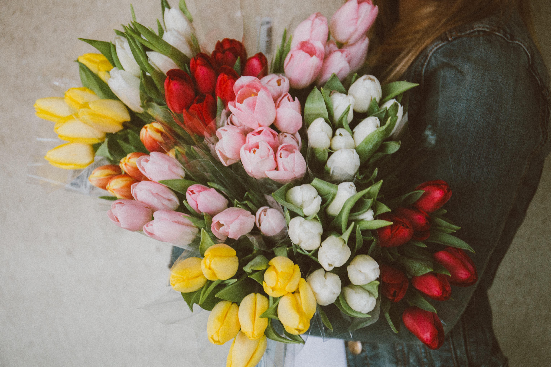 Fotoğraf çiçek Taçyaprağı Lale Buket çiçeklenme Natürmort