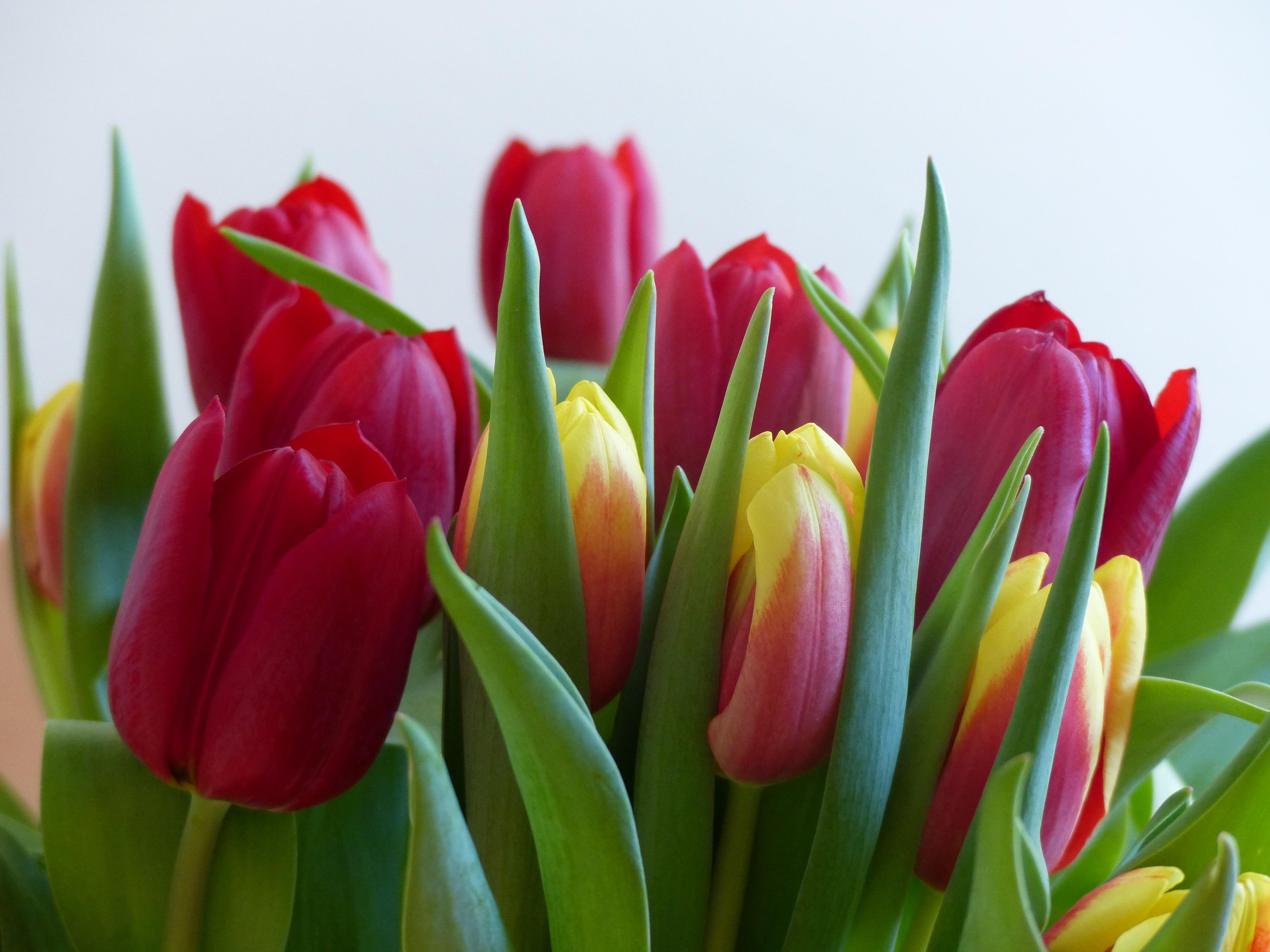 Своими, фото картинки тюльпанов