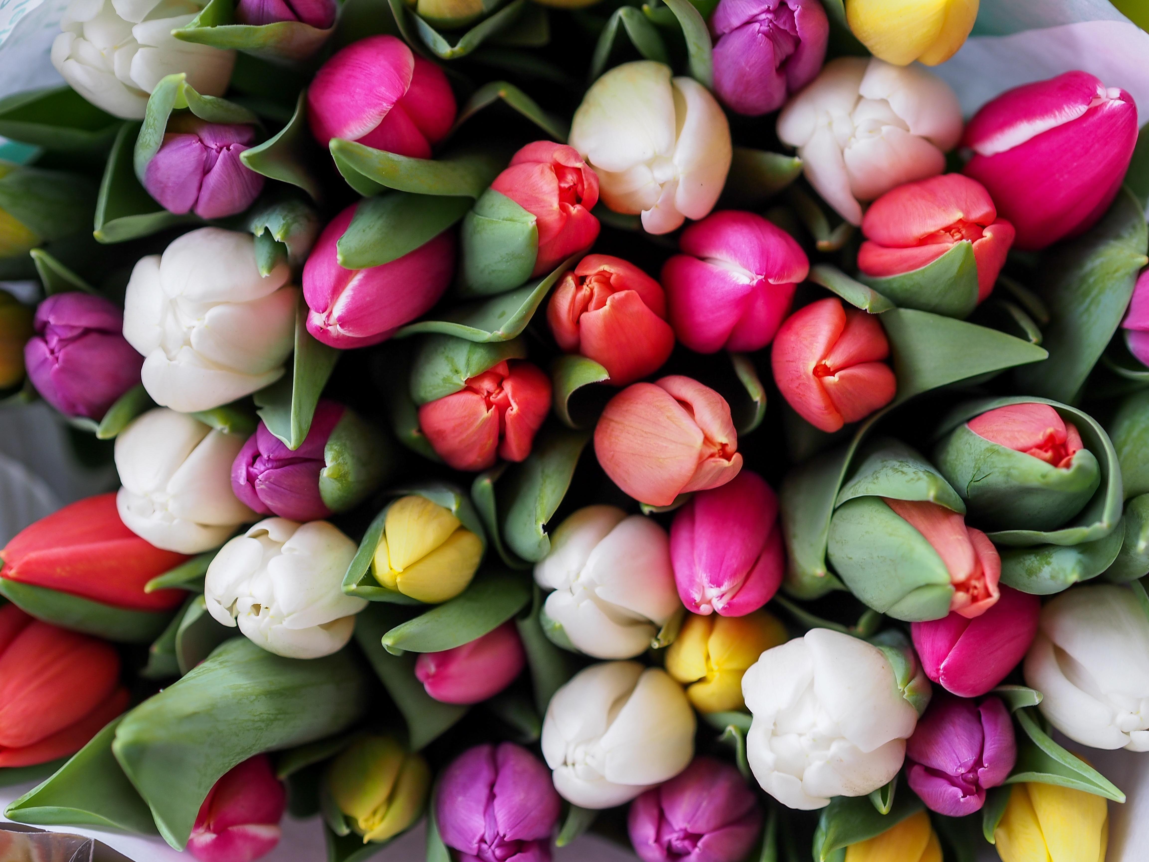 Картинки на рабочий стол букет тюльпанов