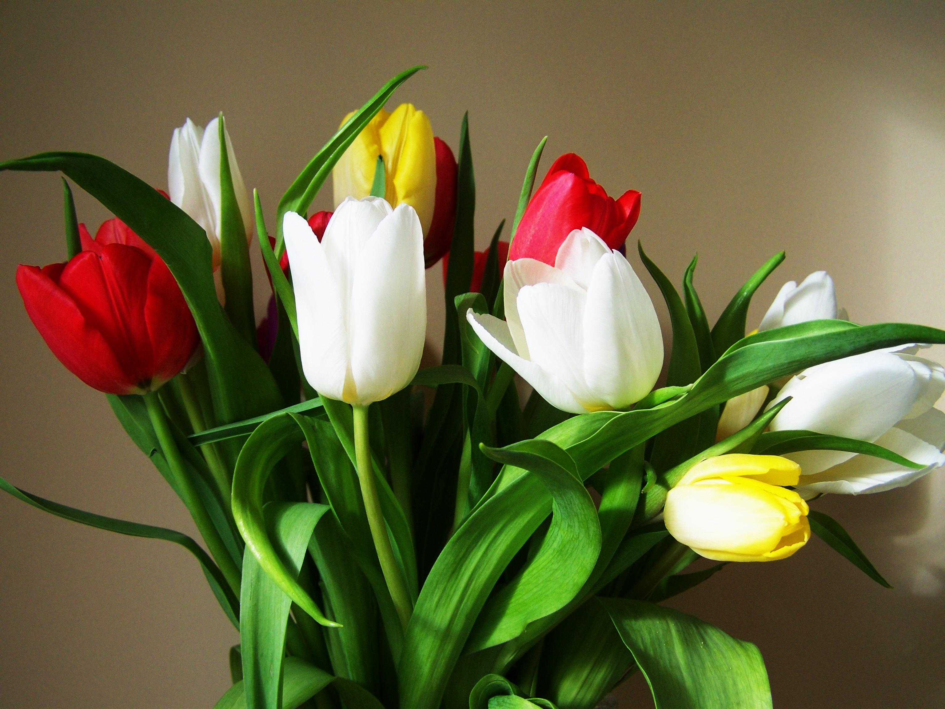День рождения, картинки тюльпанов красивых