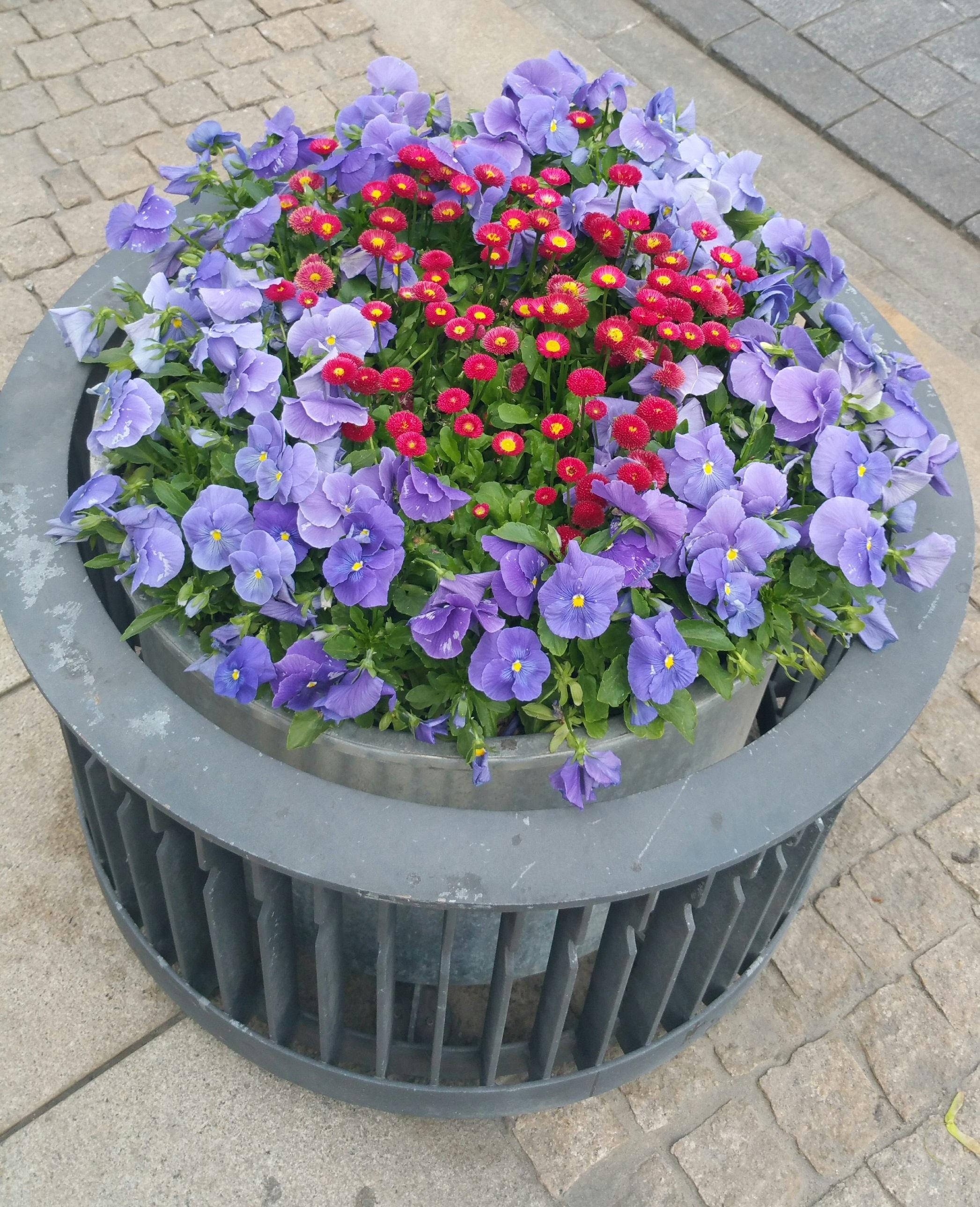 Fotos Gratis Flor Pétalo Florero Arreglo Floral Flores