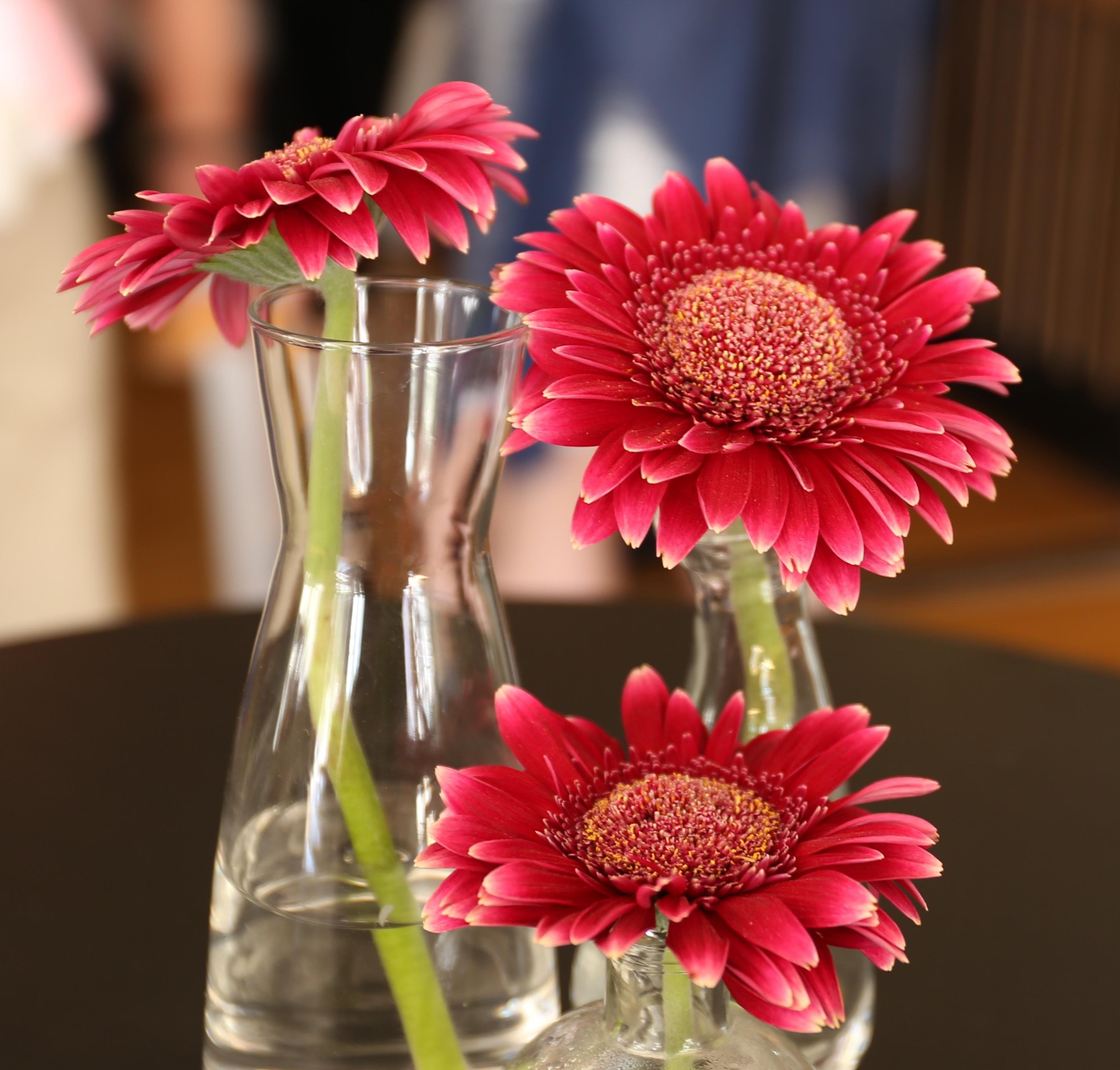 Poze Plantă Floare Petală Vază Roz Colorate Gerbera