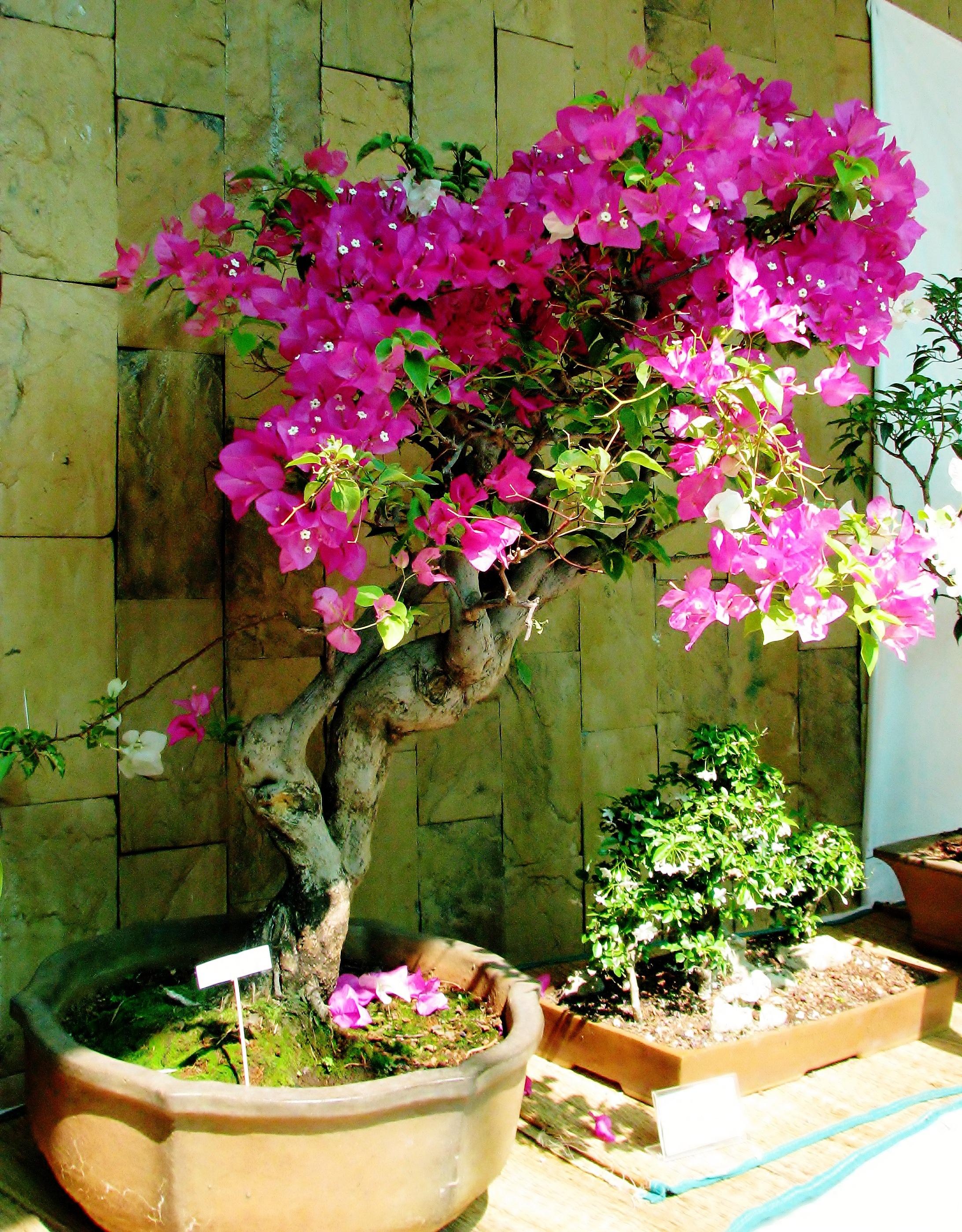 Etiket: ilginç saksı bitkileri