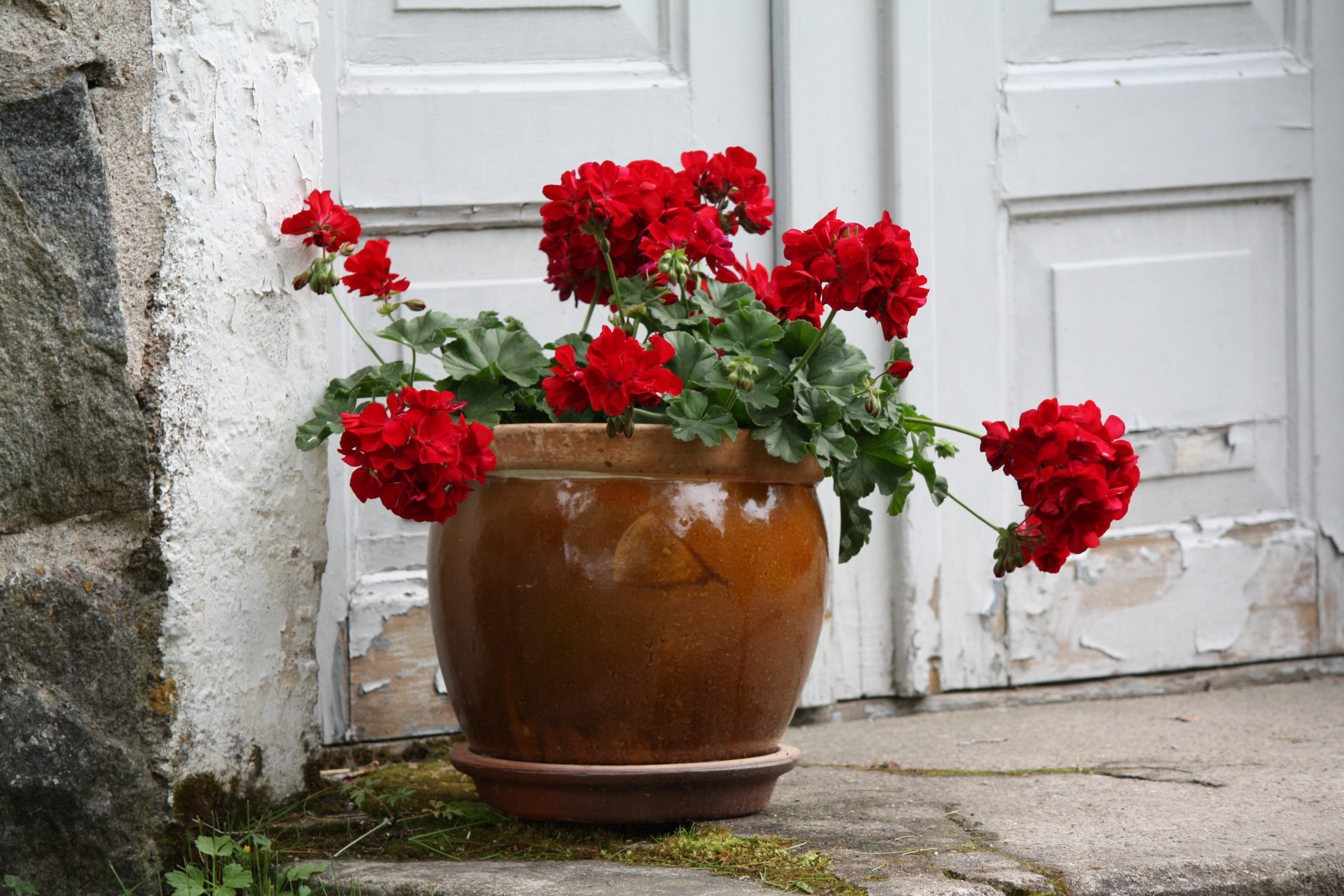 Kostenlose foto Blume Pot Stein Treppe Sommer Blumen