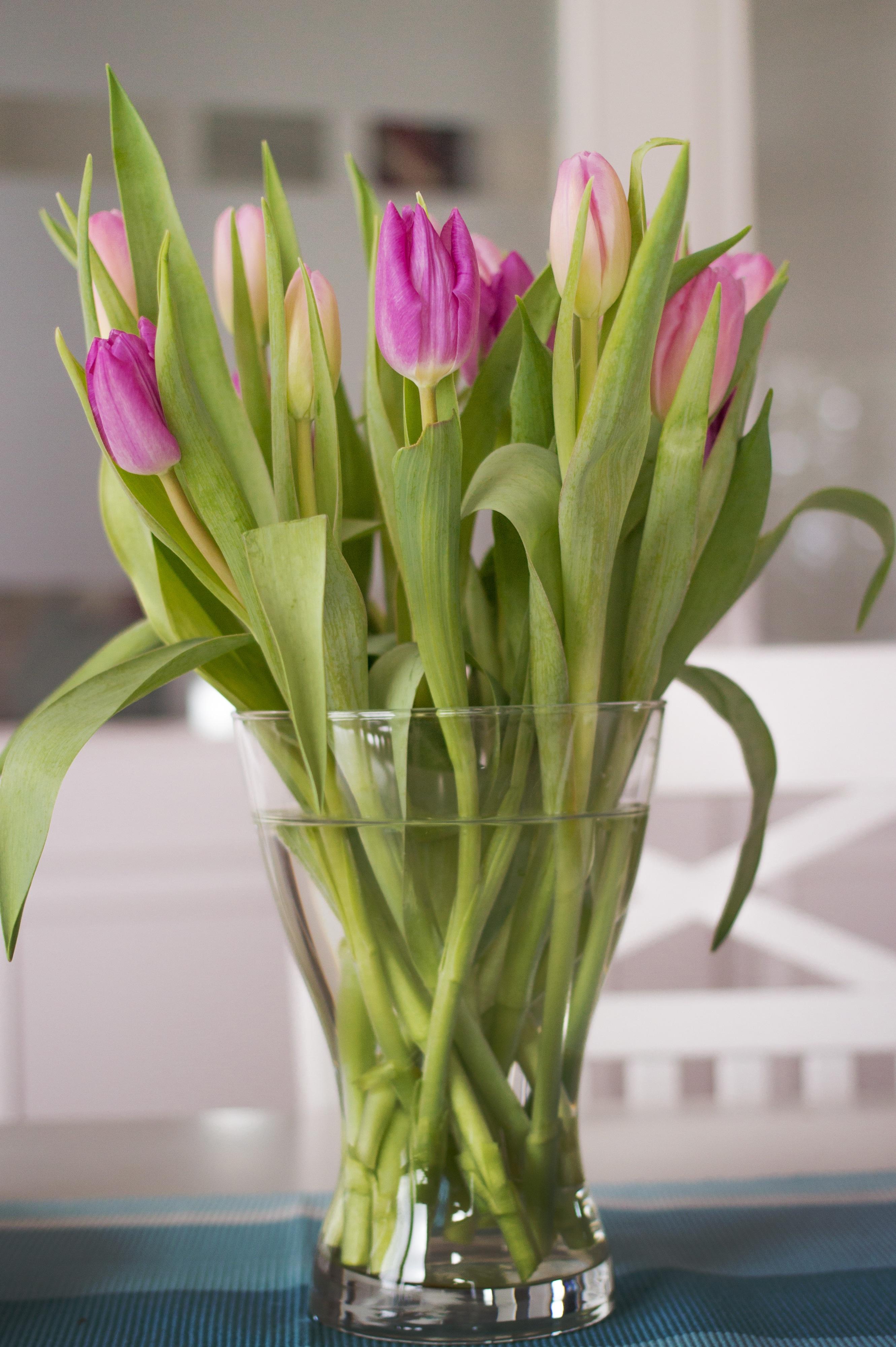 Poze Plantă Floare Violet A Inflori Dragoste Lalea