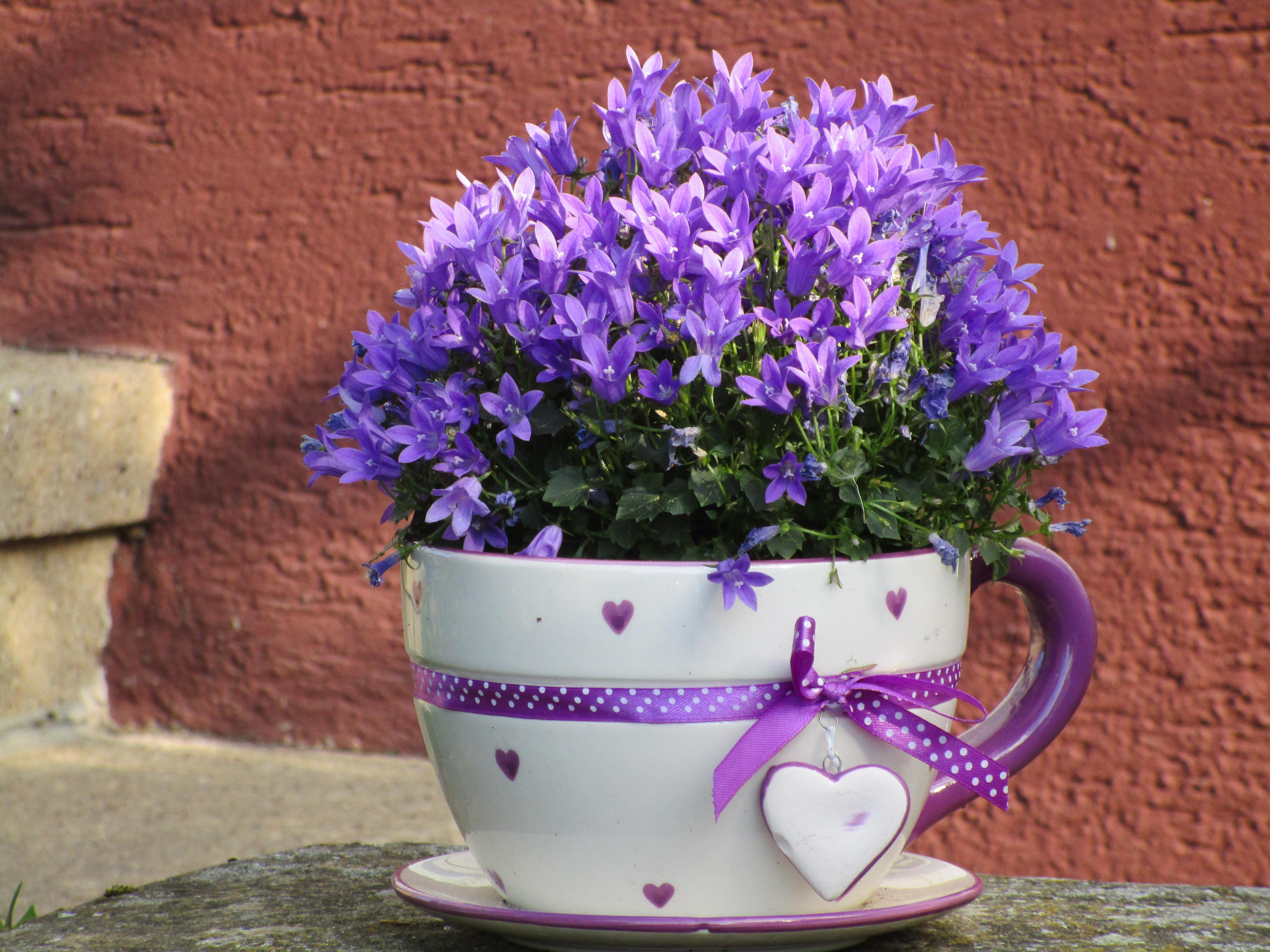 Gratuites violet Coupe cœur décoration jardin décor