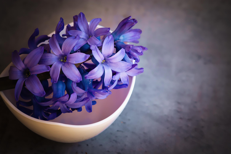 Free Images Plant Purple Petal Bowl Close Blue Flower Deco