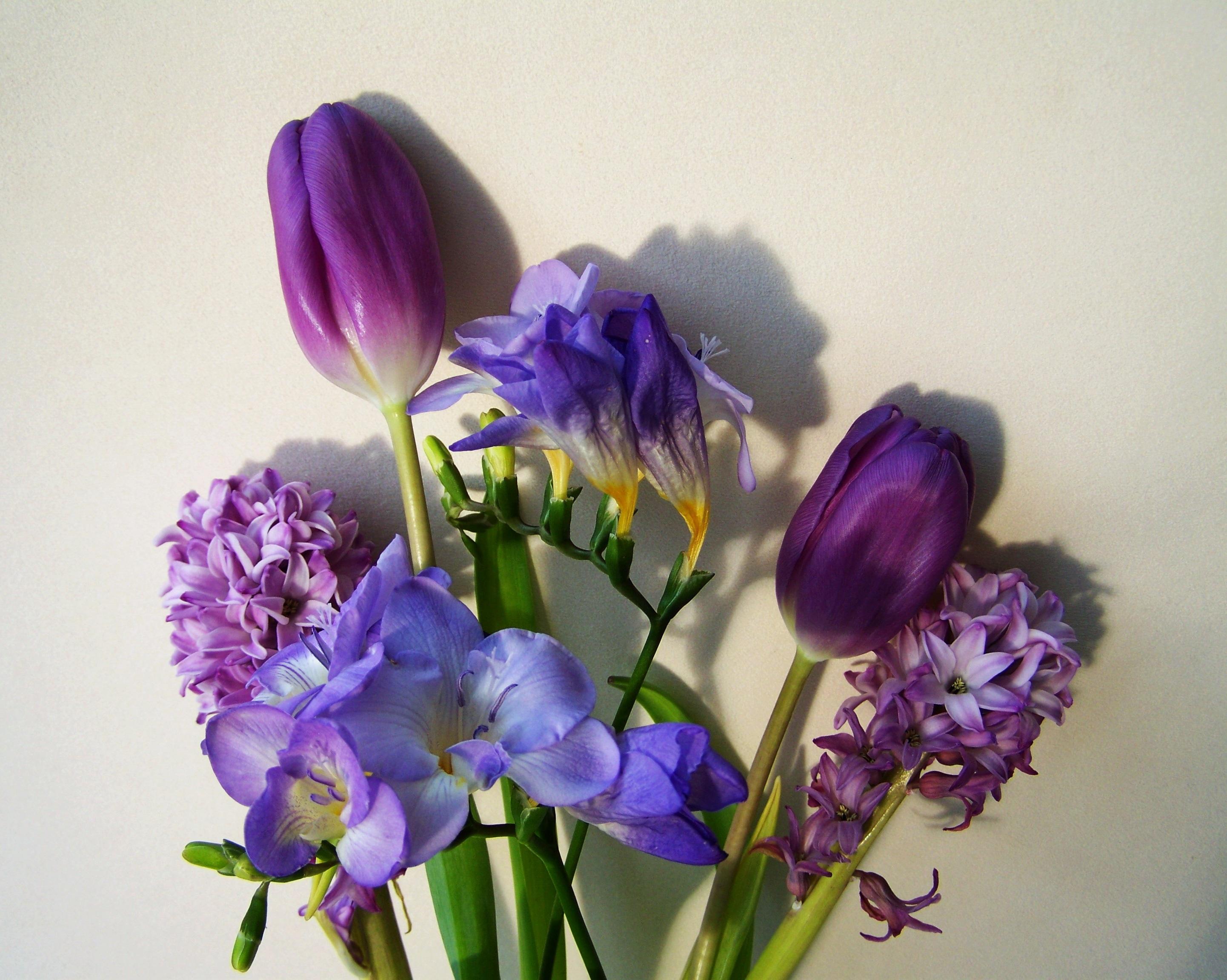 Синие цветы срезка фото