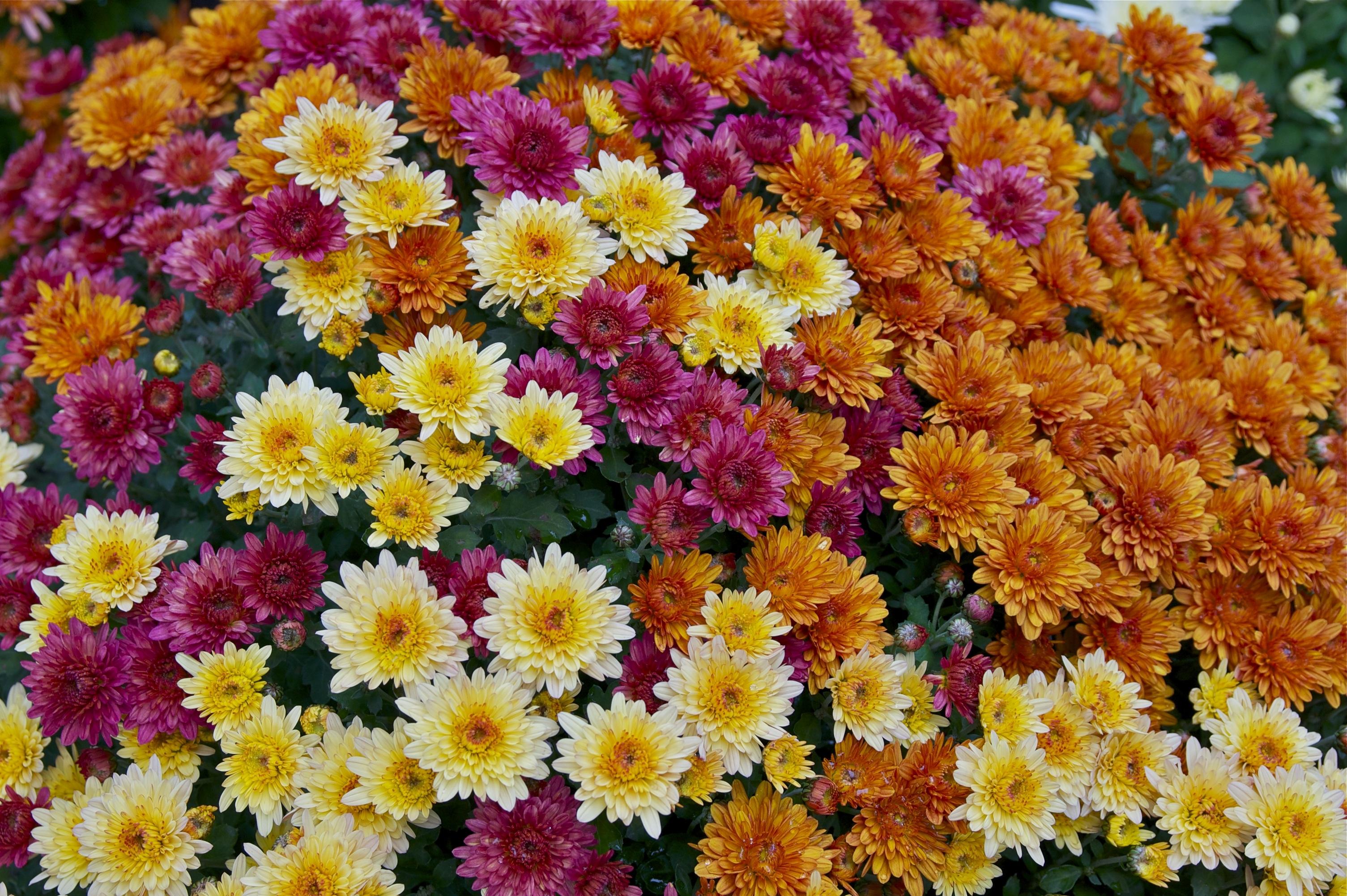Images Gratuites : fleur, violet, pétale, floral, Orange, botanique ...