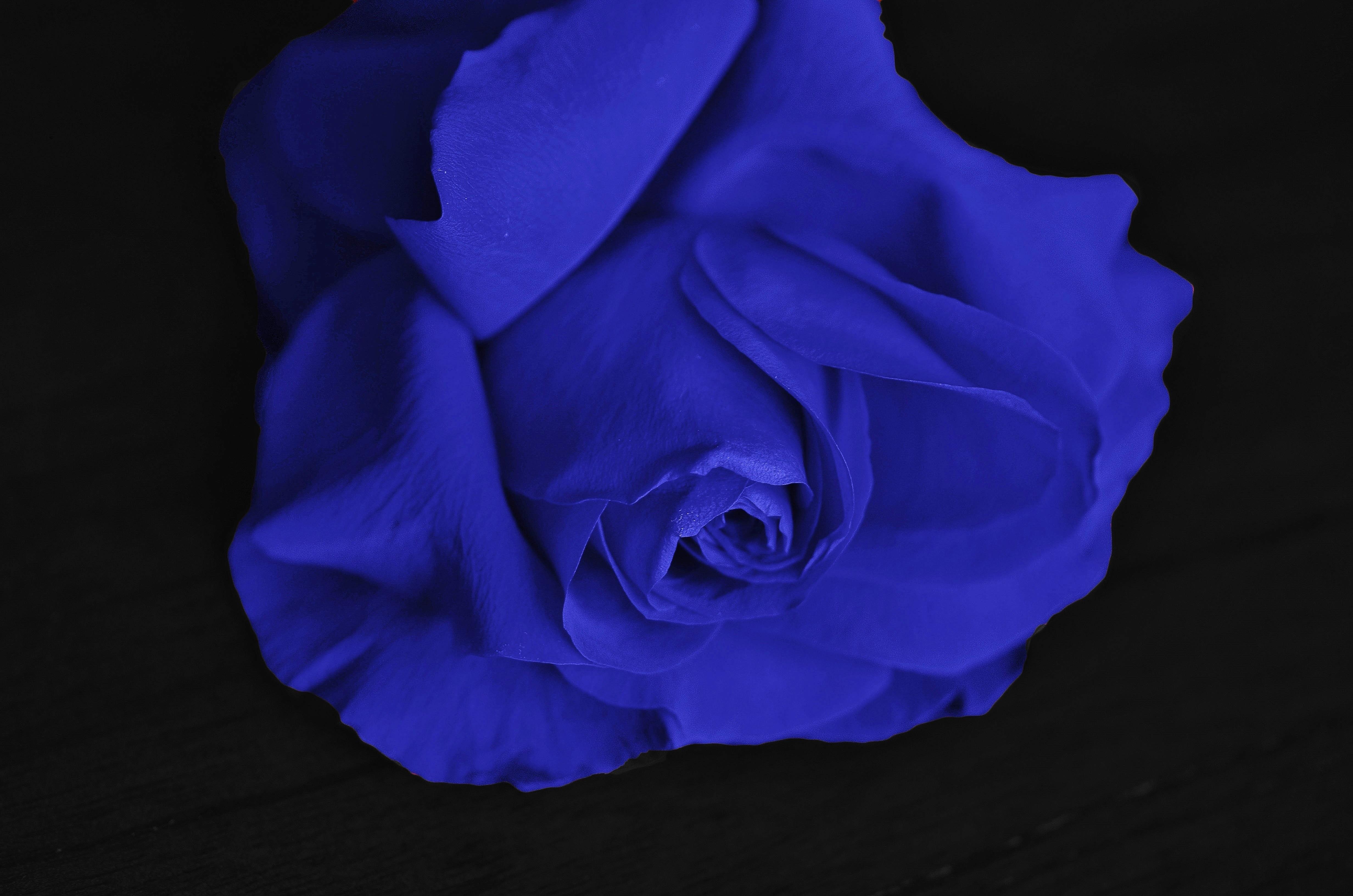 Free Images Flower Petal Love Color Romance Romantic Wedding