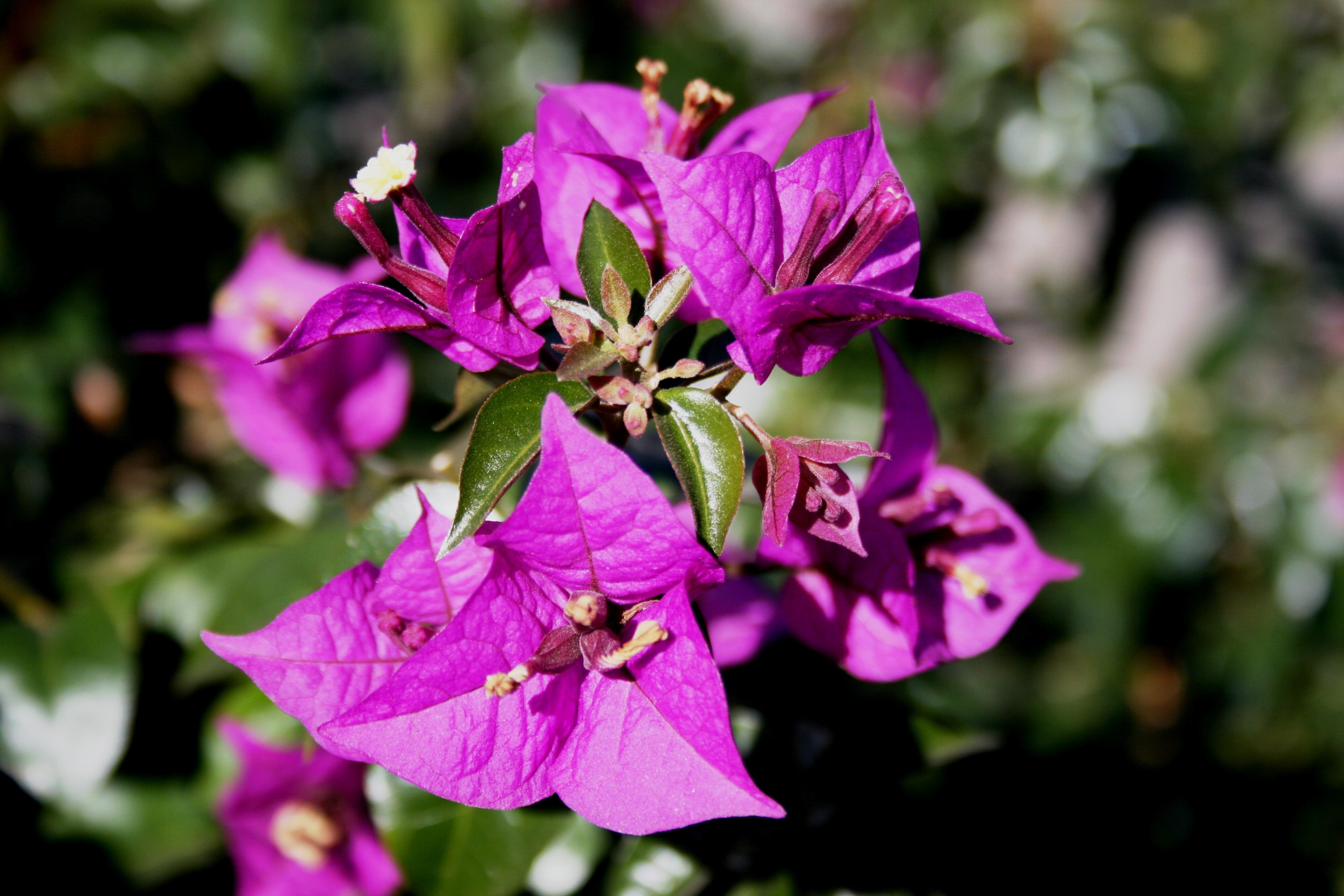 Free Images Purple Petal Spring Garden Flora Wildflower