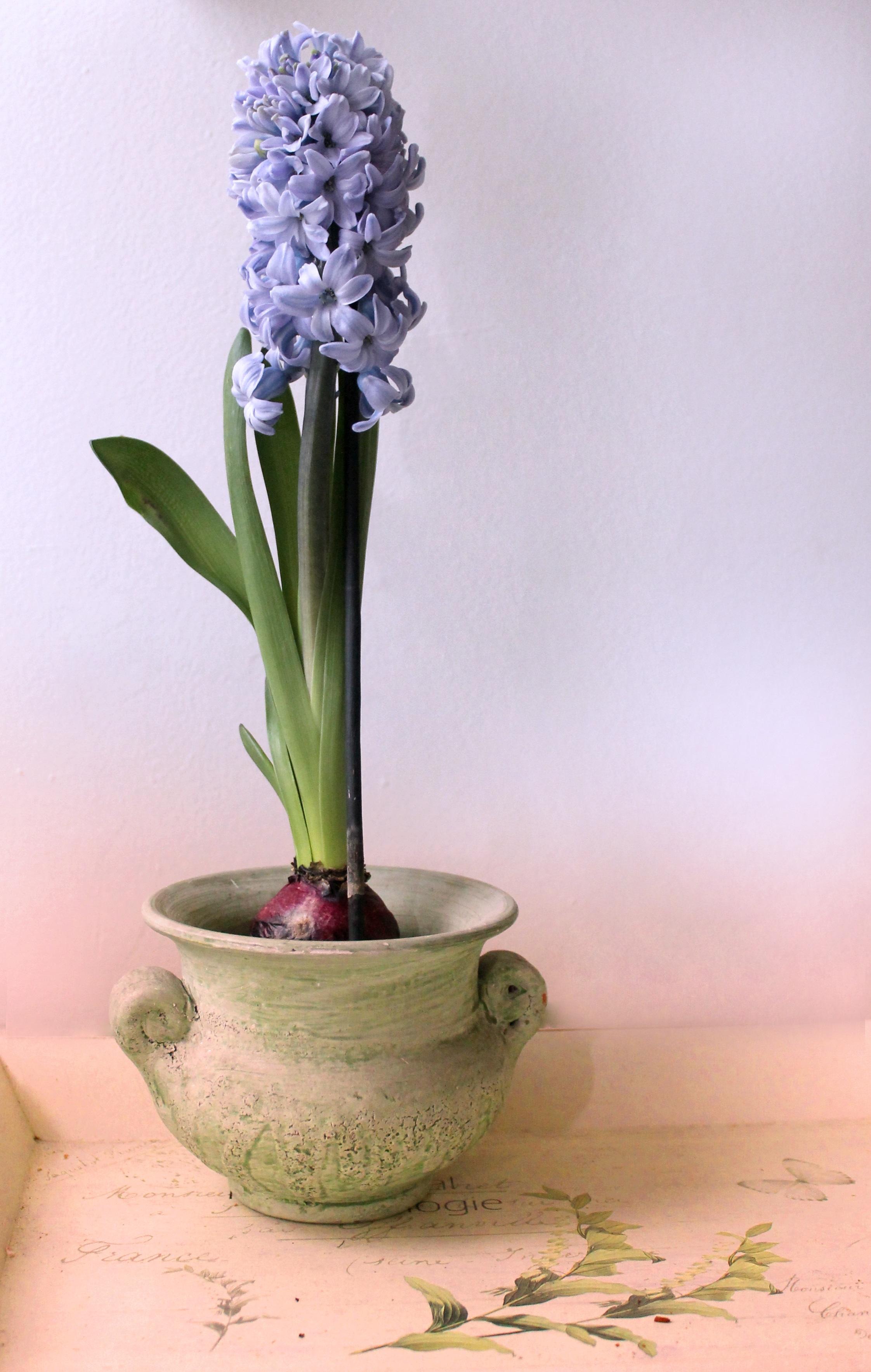 Gambar Menanam Ungu Vas Tenang Flora Masih Hidup Warna Pot Bunga Batu Suasana Hati Budidaya