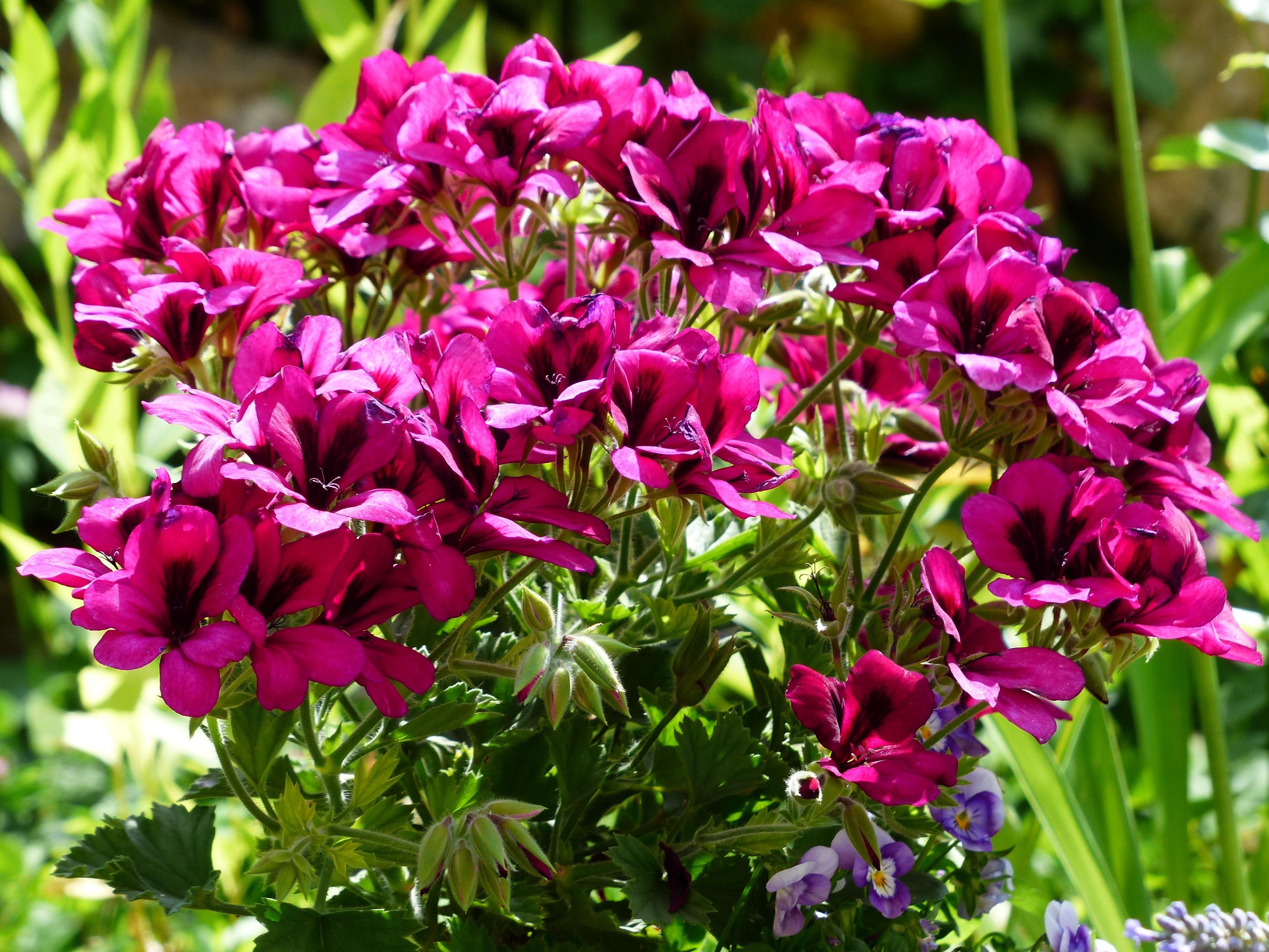 hình ảnh : thực vật, Đỏ, Thực vật học, Đầy màu sắc, vườn ...