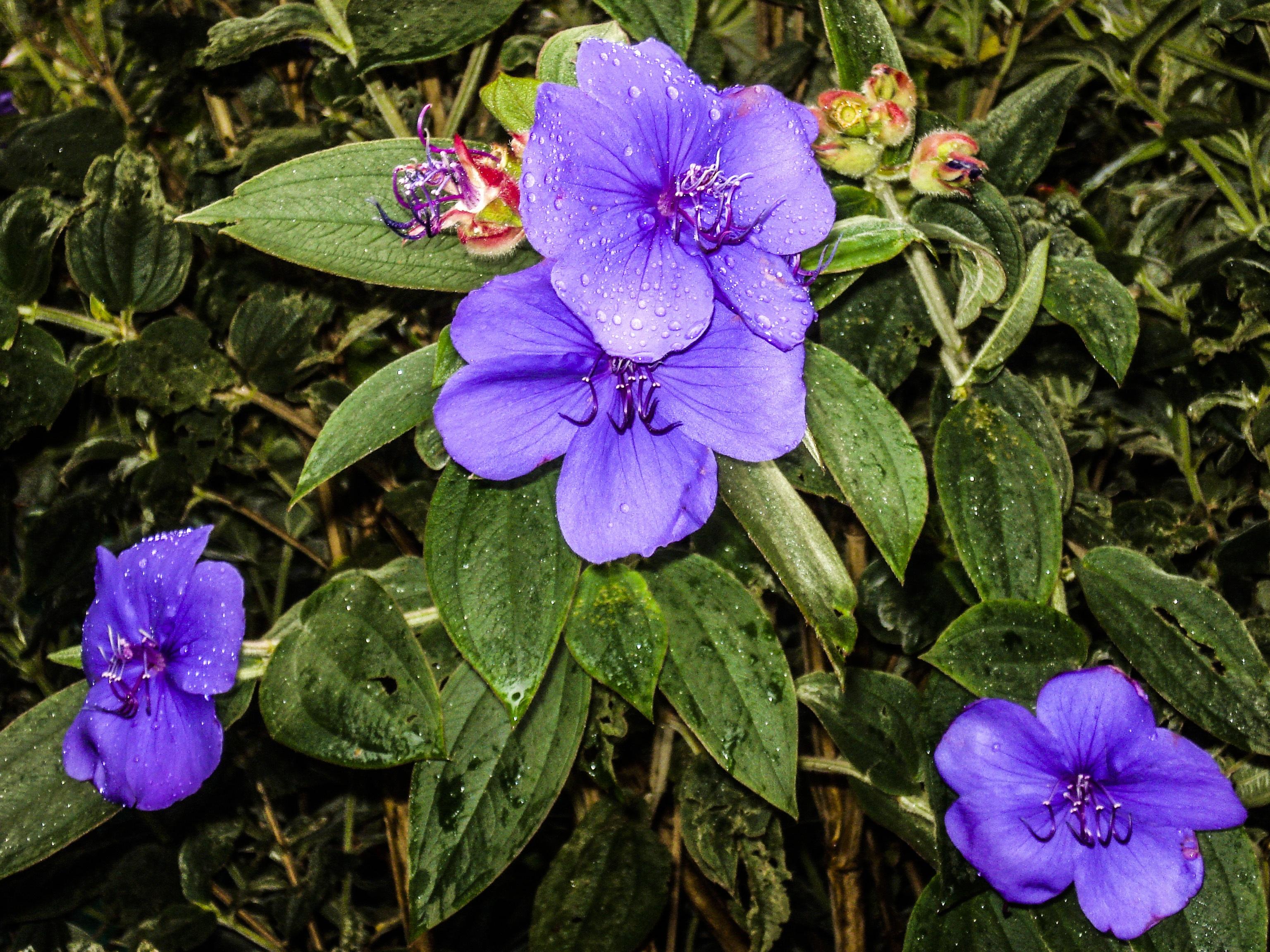 Images Gratuites : fleur, printemps, botanique, jardin ...