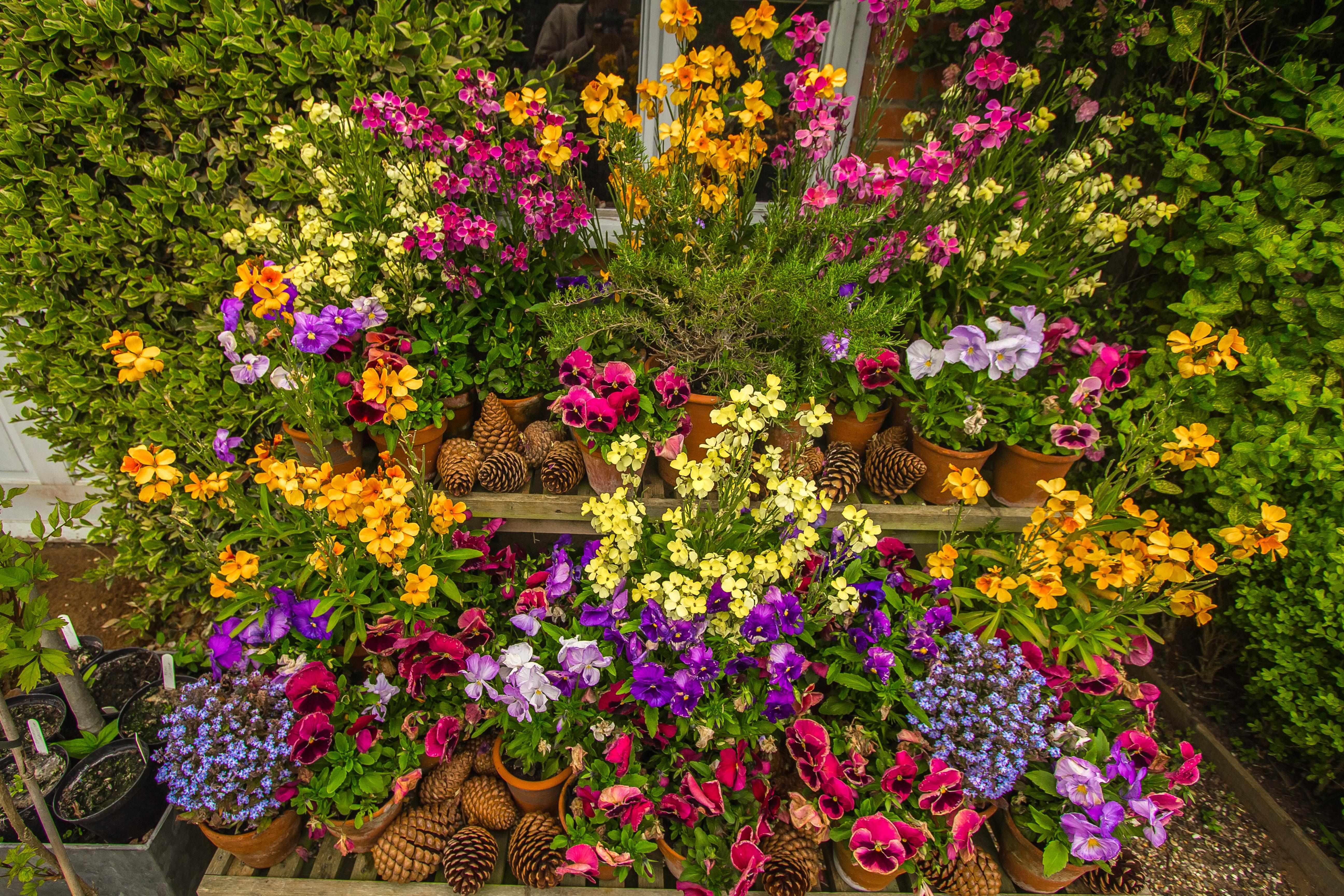 images gratuites fleur printemps jardin flore fleur sauvage fleurs color es arbuste. Black Bedroom Furniture Sets. Home Design Ideas