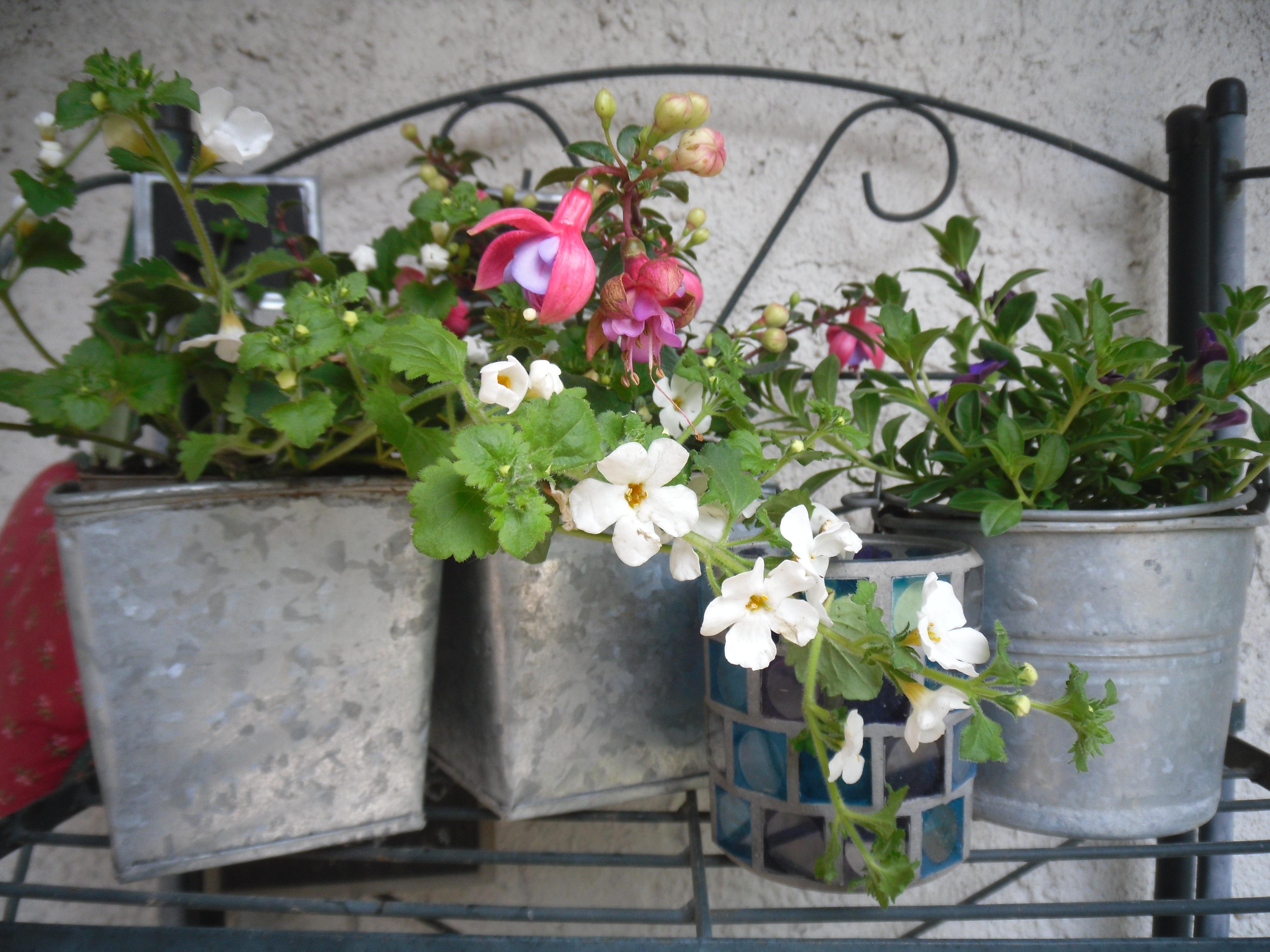Images gratuites printemps jardin plantation pot de for Plantation de fleurs