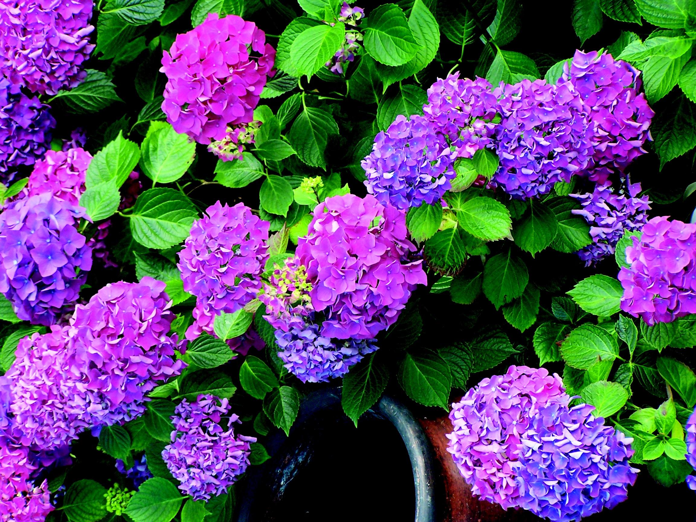 Gratis billeder : blomst, forår, have, blomster, Busk, blomstring ...