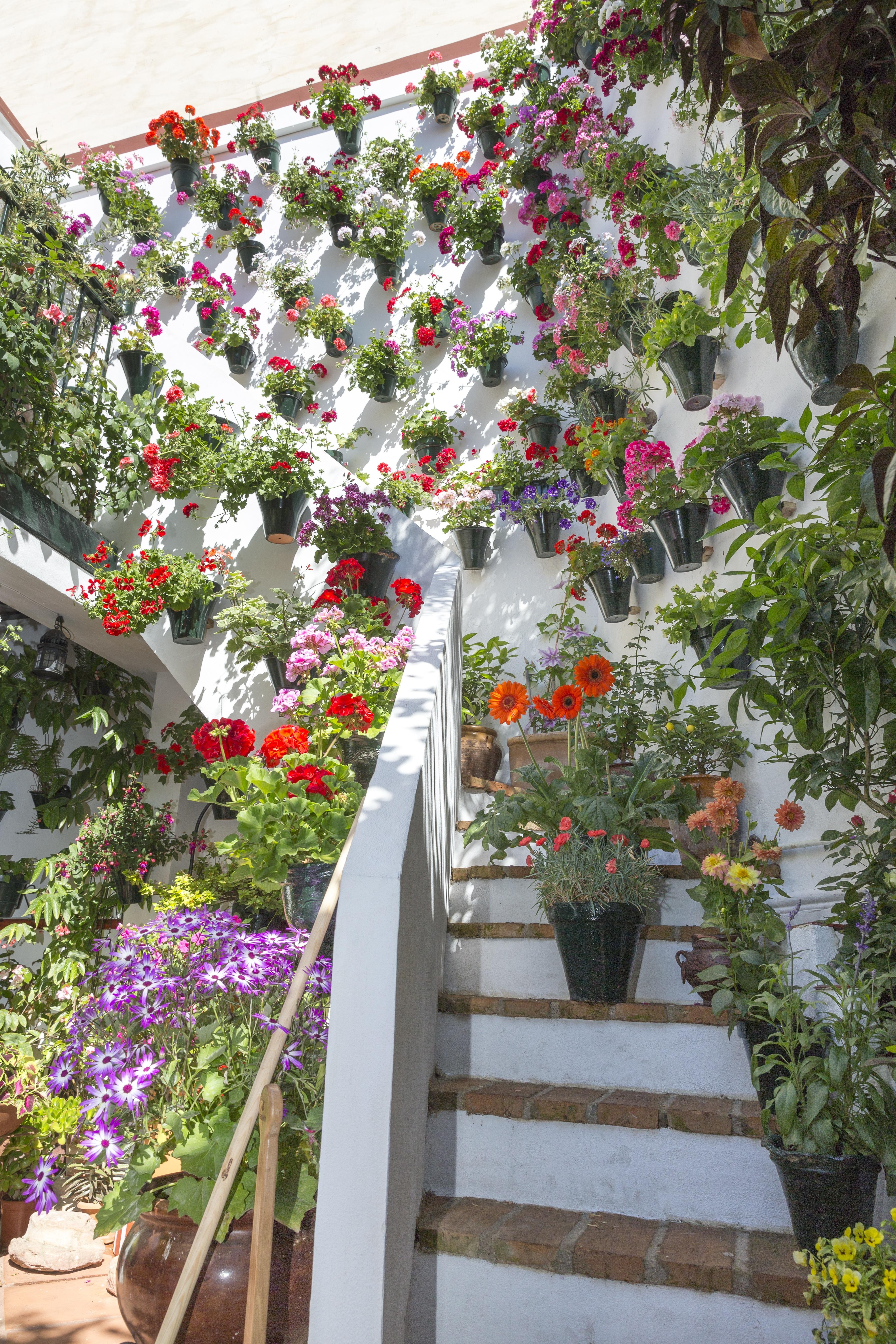 Fotos gratis flor primavera verde patio interior for Decoracion de patios con macetas