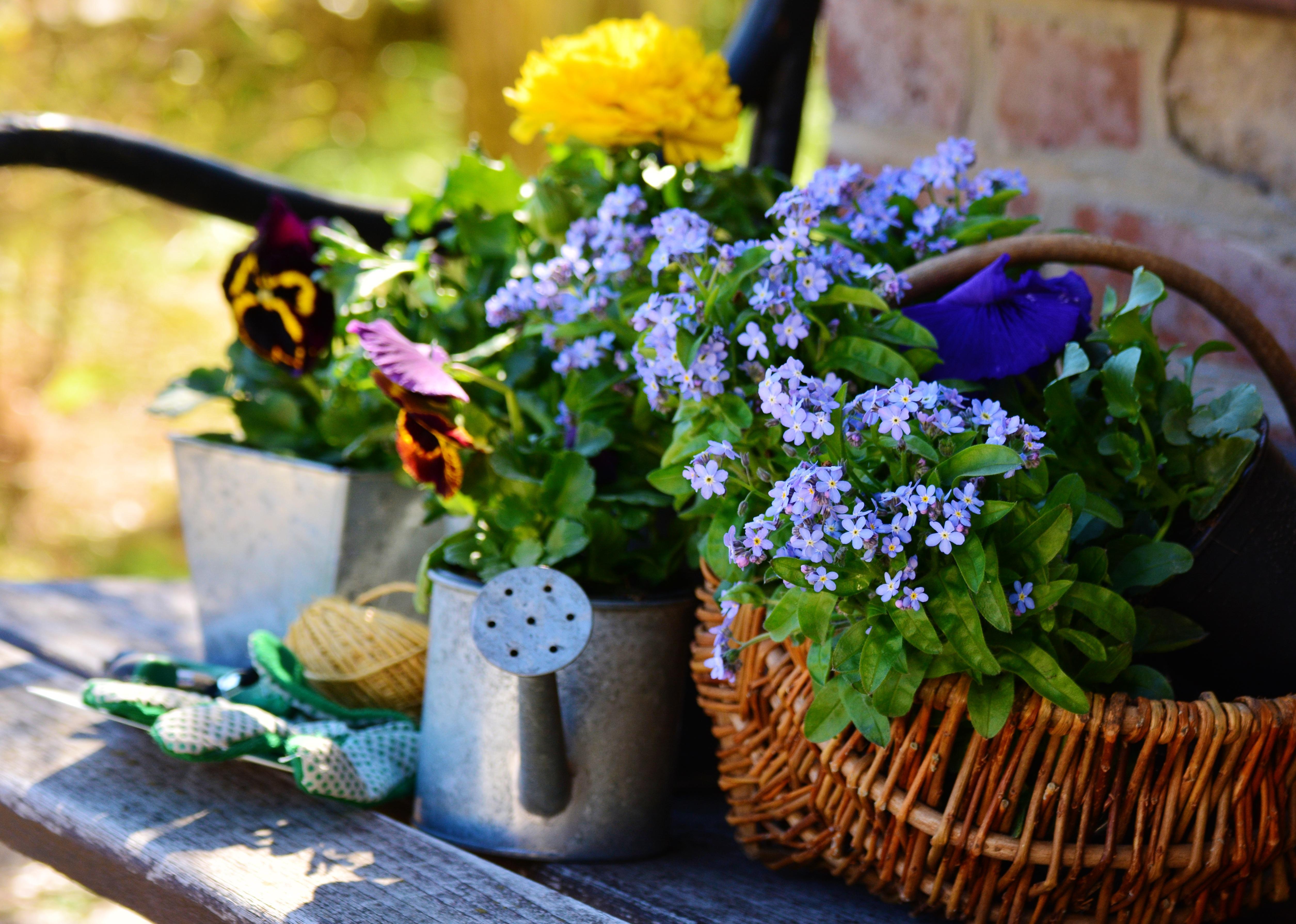 Fotos gratis planta flor primavera verde hierba for Fruhling gartendeko