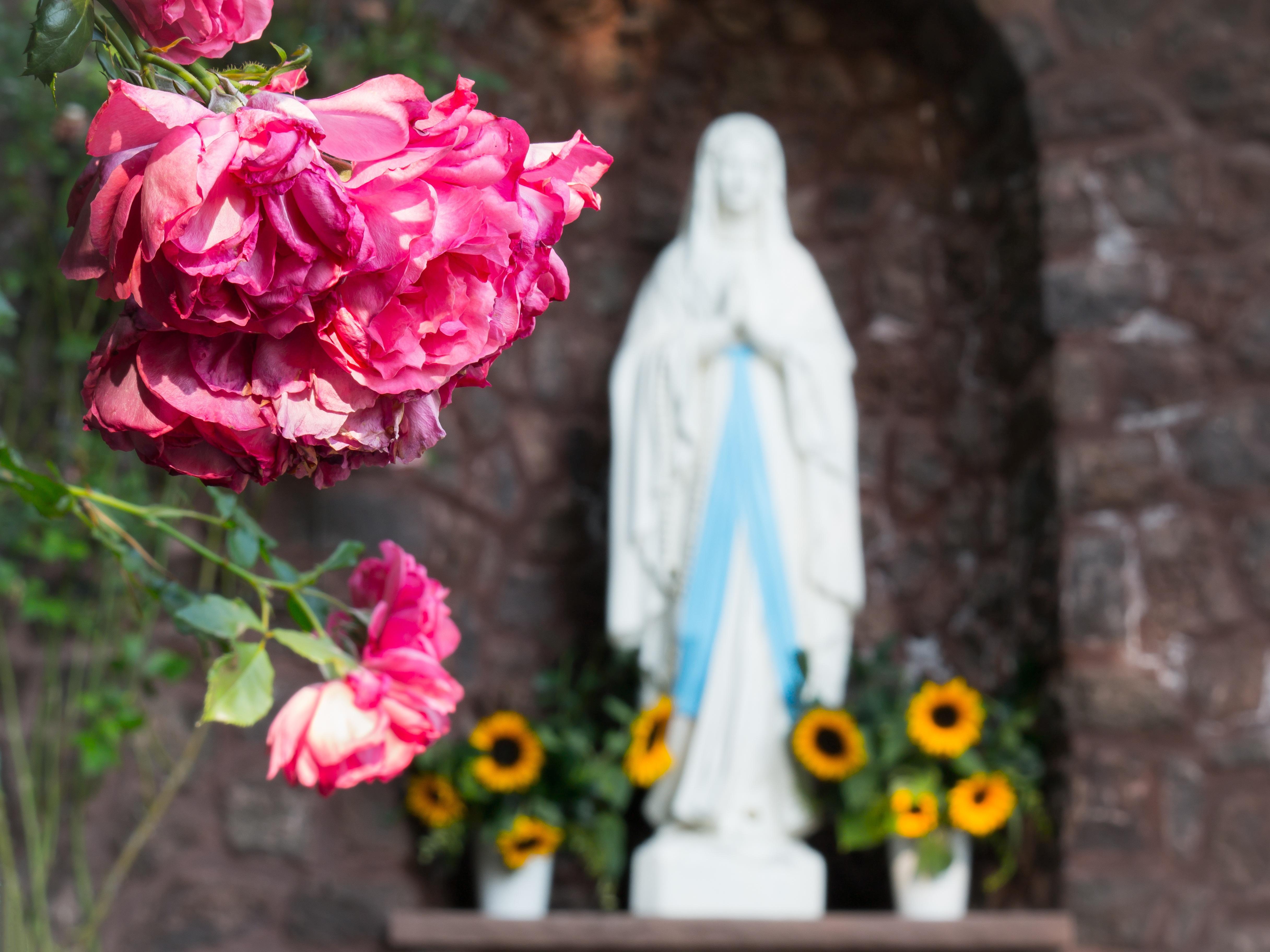 Fotos Gratis Planta Flor Estatua Rosa Primavera