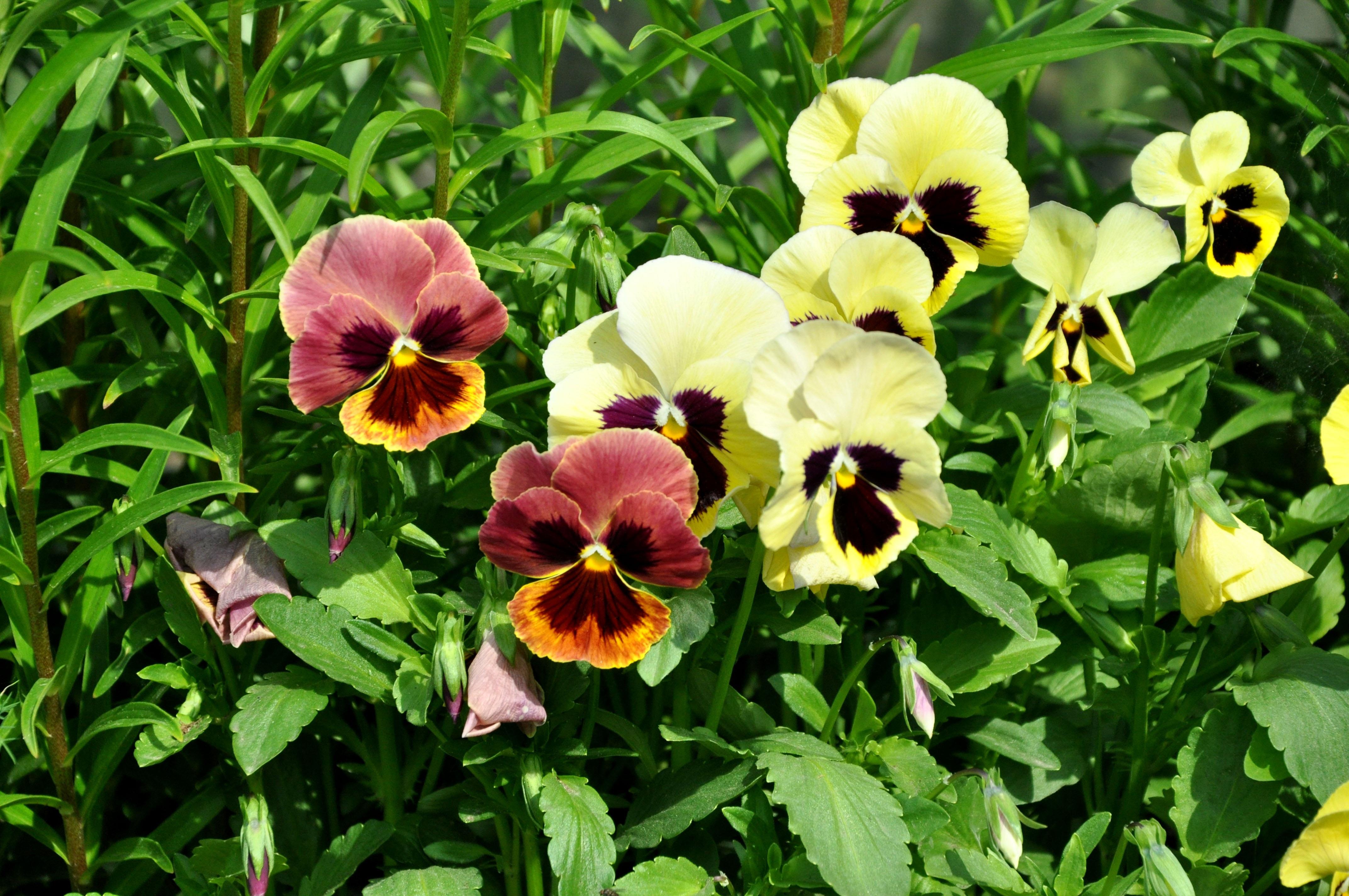 Images gratuites fleur t botanique jaune flore les plantes fleur sauvage dacha - Image fleur violette gratuite ...