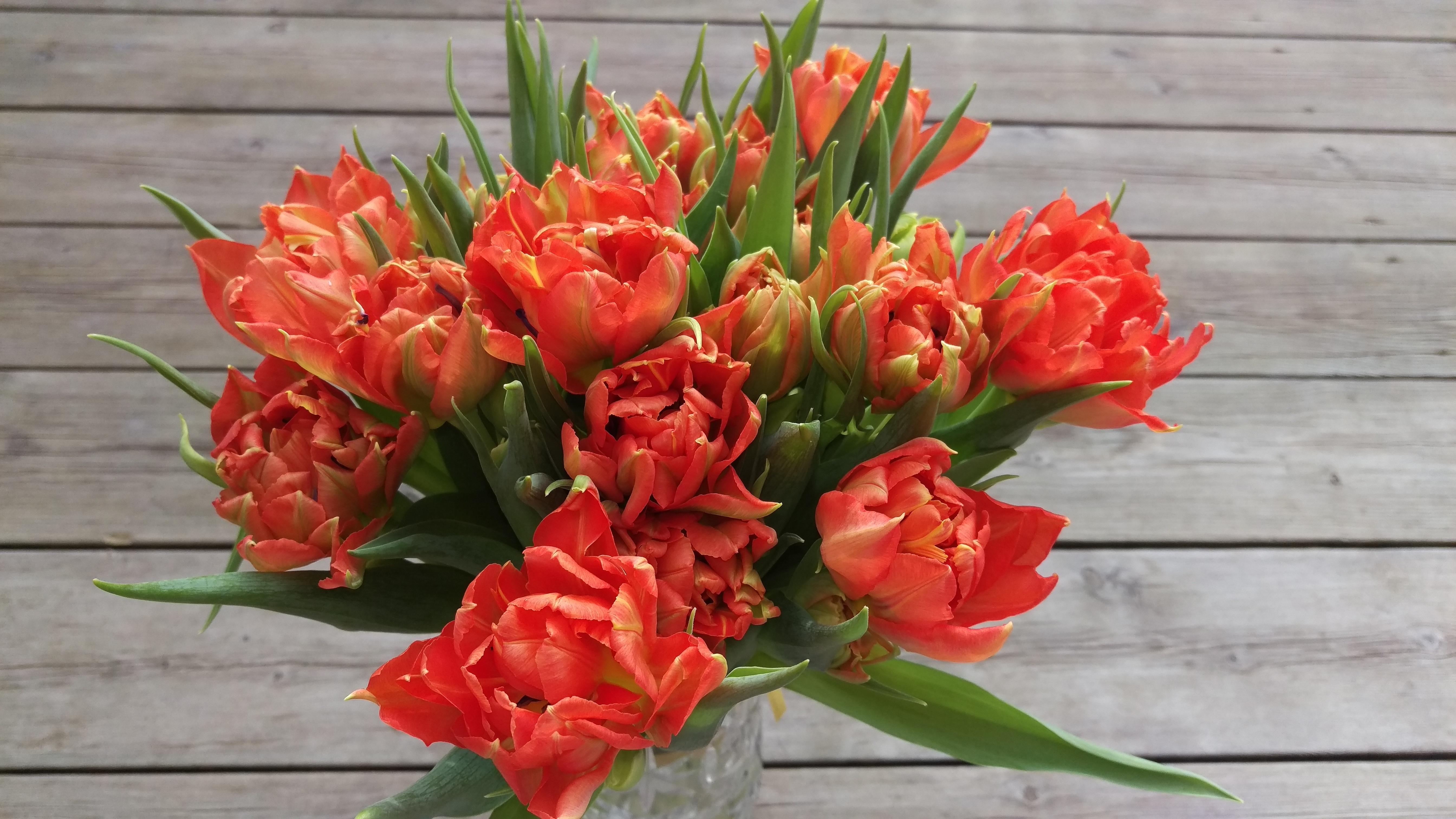 Images gratuites fleur tulipe tulipes fleuriste for Fleurs de fleuriste