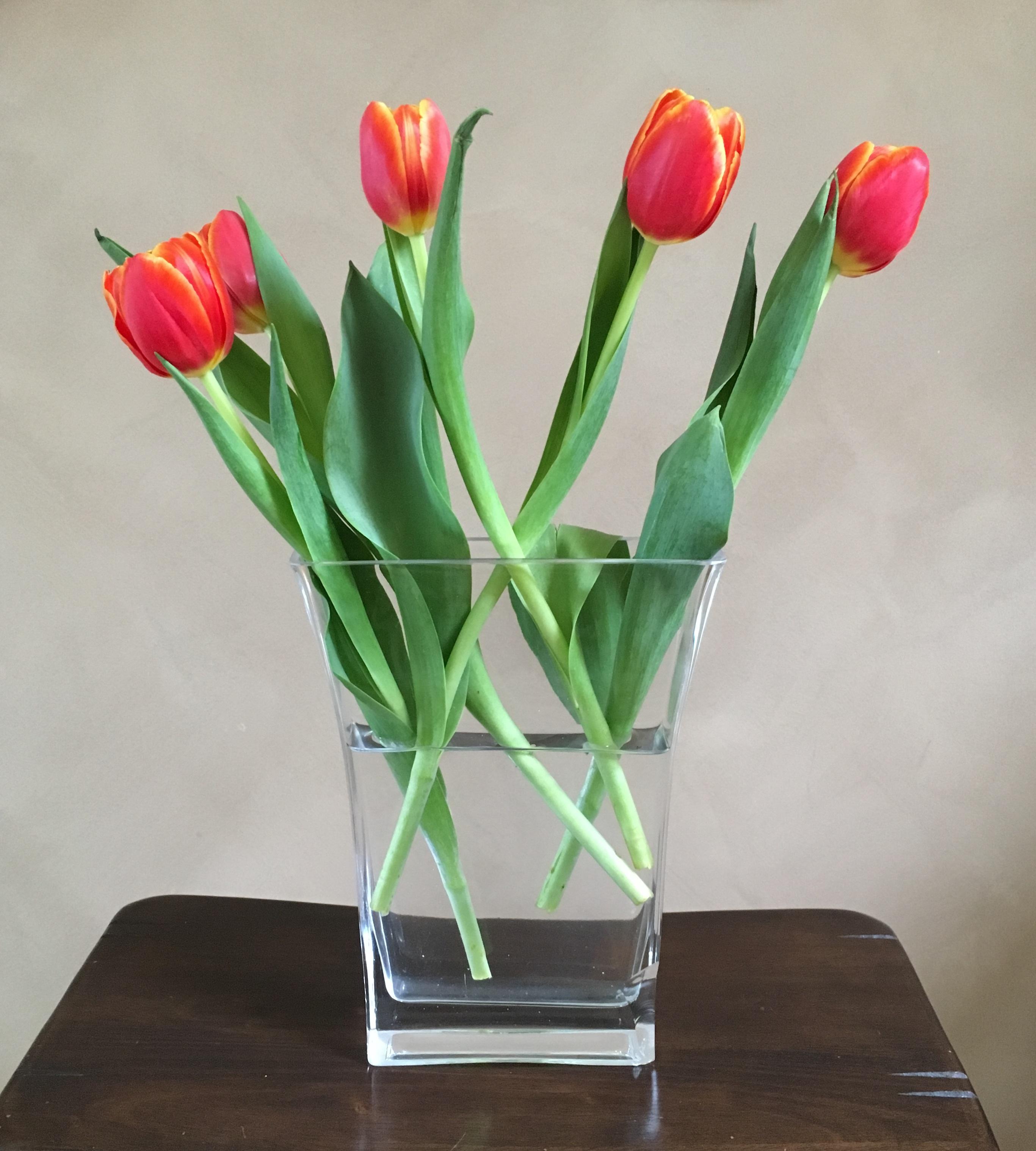 Banco de imagens plantar flor tulipa vaso flor stica - Cortar hierba alta ...