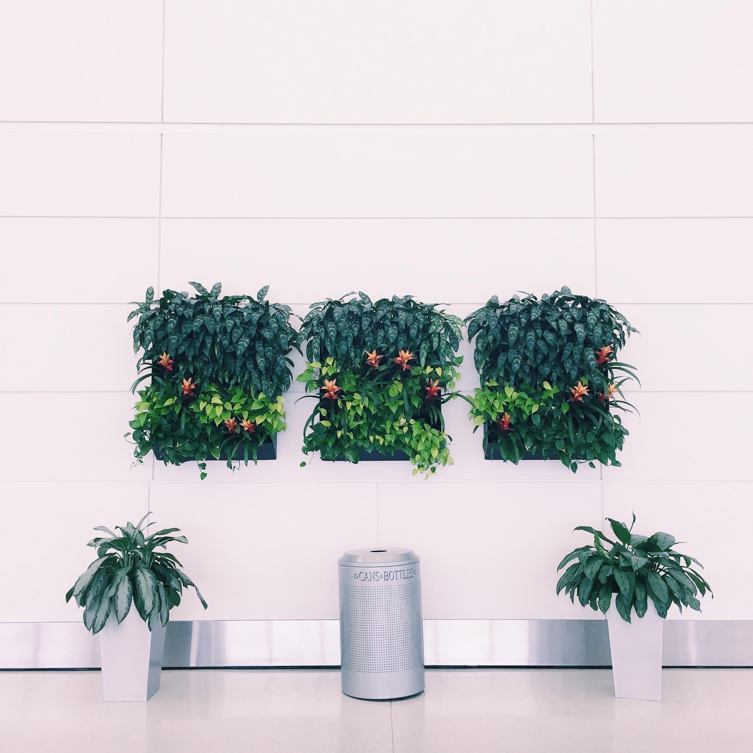 images gratuites plante mur mod le vert clairage design d 39 int rieur conception. Black Bedroom Furniture Sets. Home Design Ideas