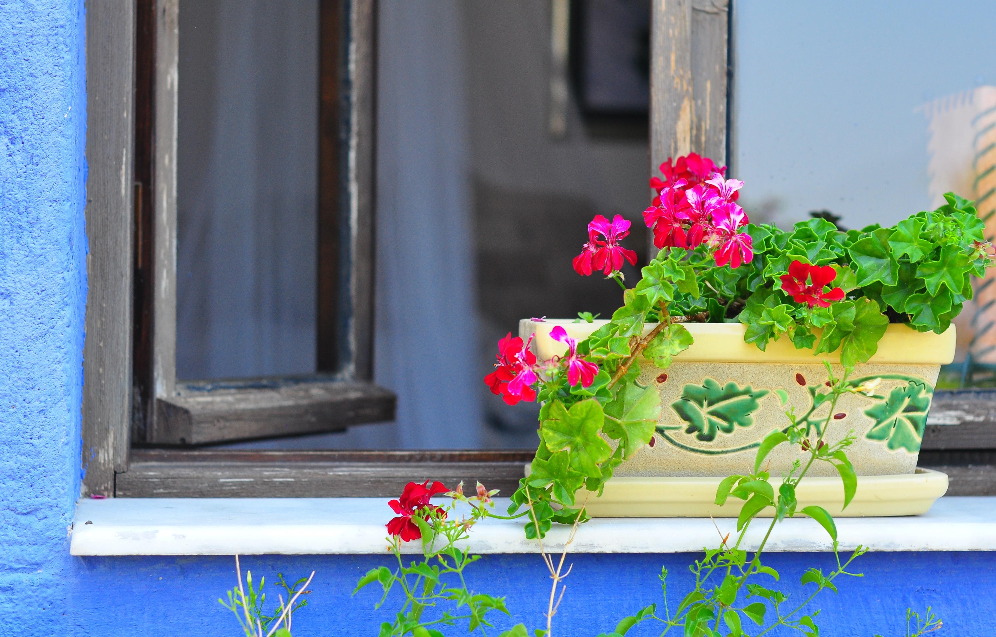 картинки окна с растениями диск символизирует