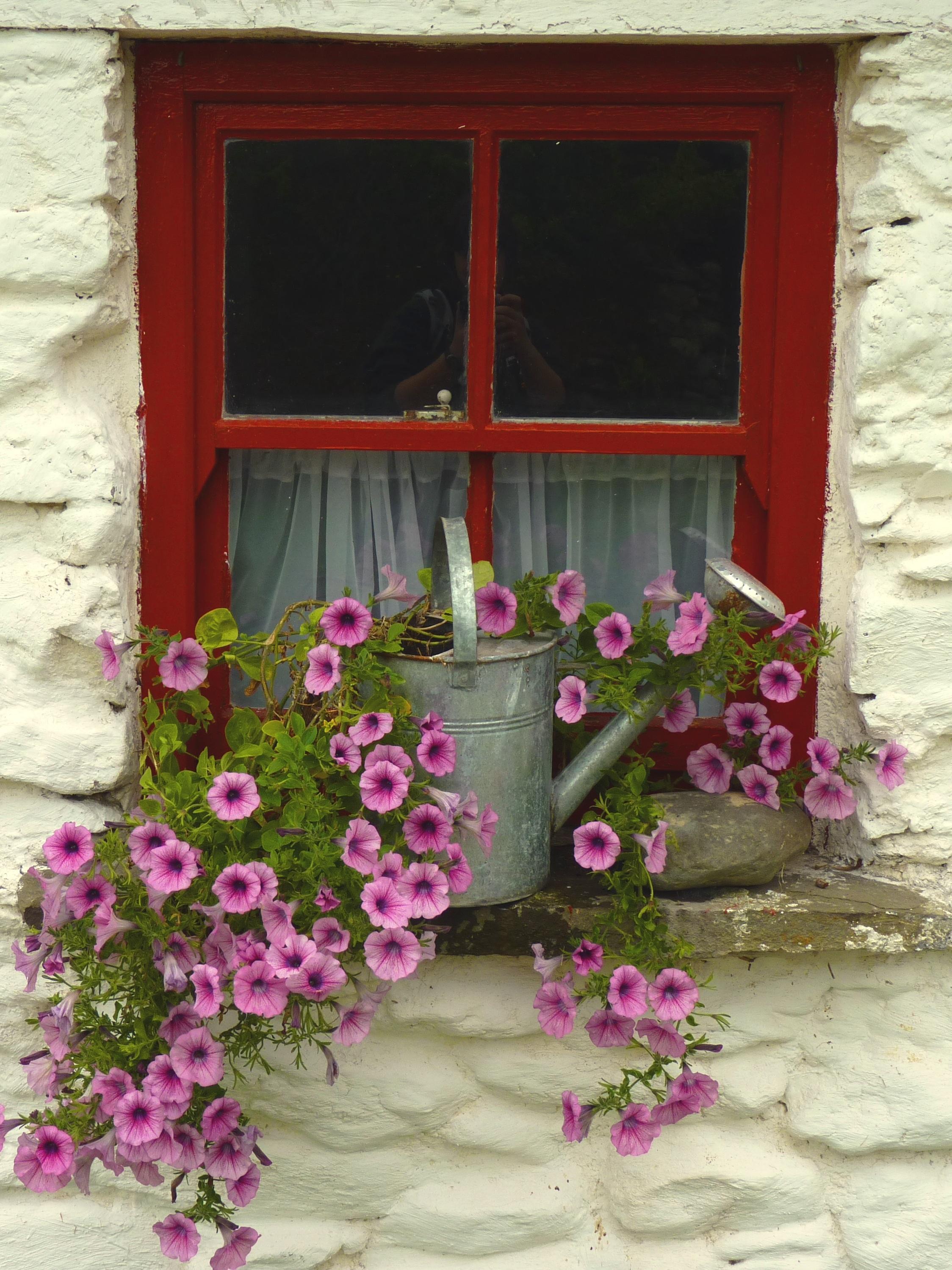 Fotos gratis : planta, flor, Flores, Decoración navideña, marco ...