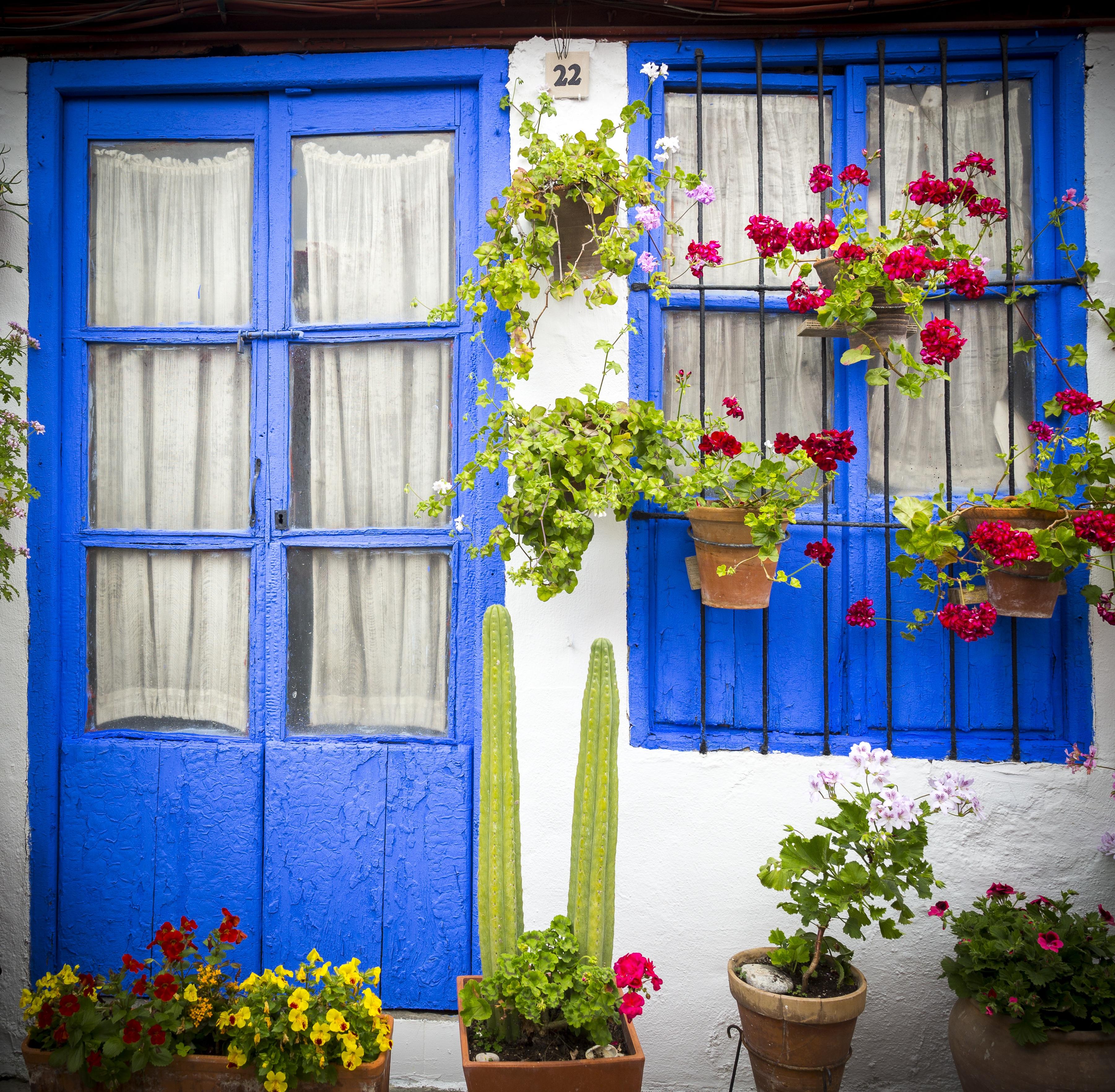 Images Gratuites Plante Maison Balcon Vert Facade Bleu