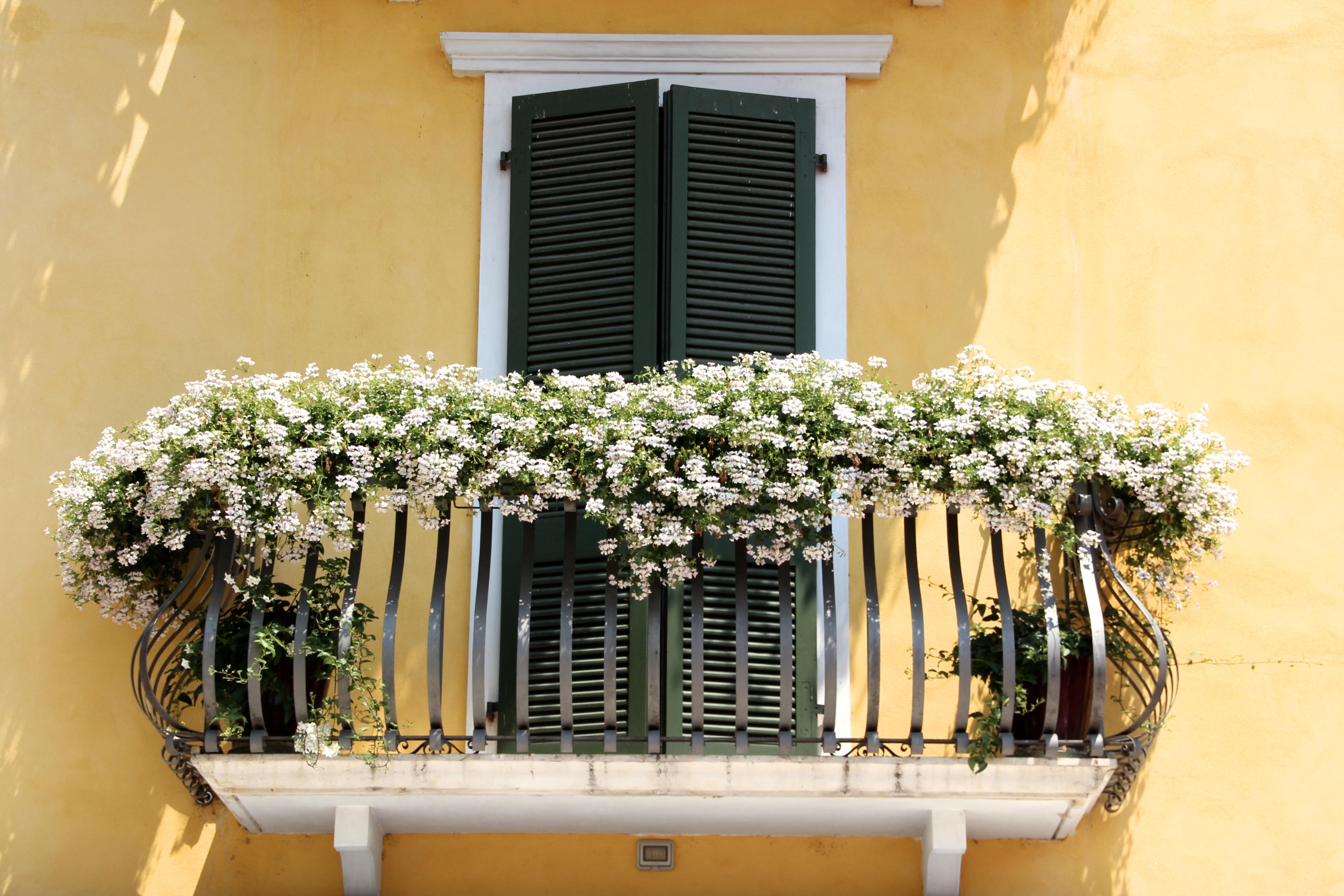 Картинки : растение, цветок, окно, главная, балкон, италия, .