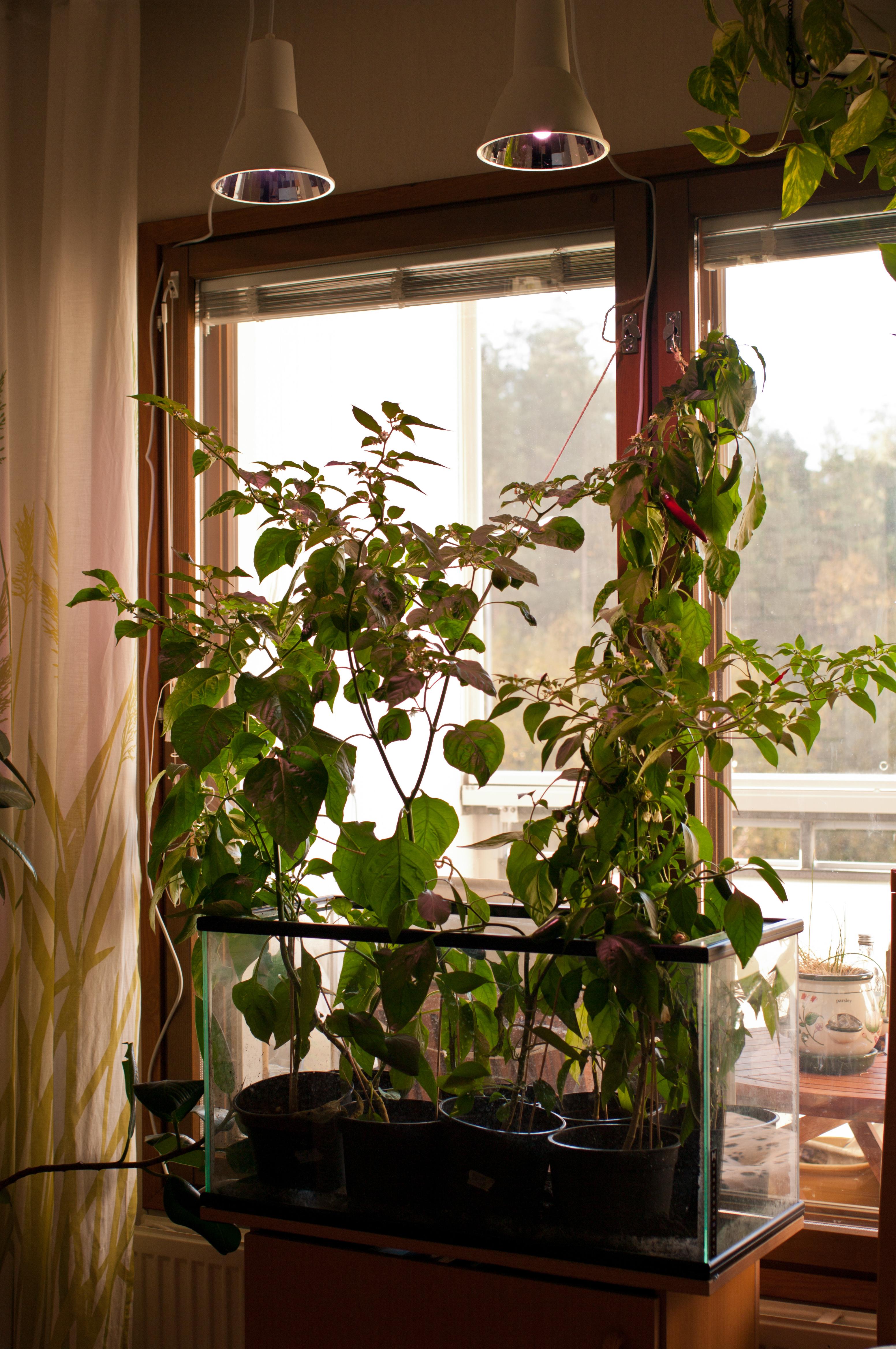 Images Gratuites : fleur, fenêtre, maison, vert, le Chili ...