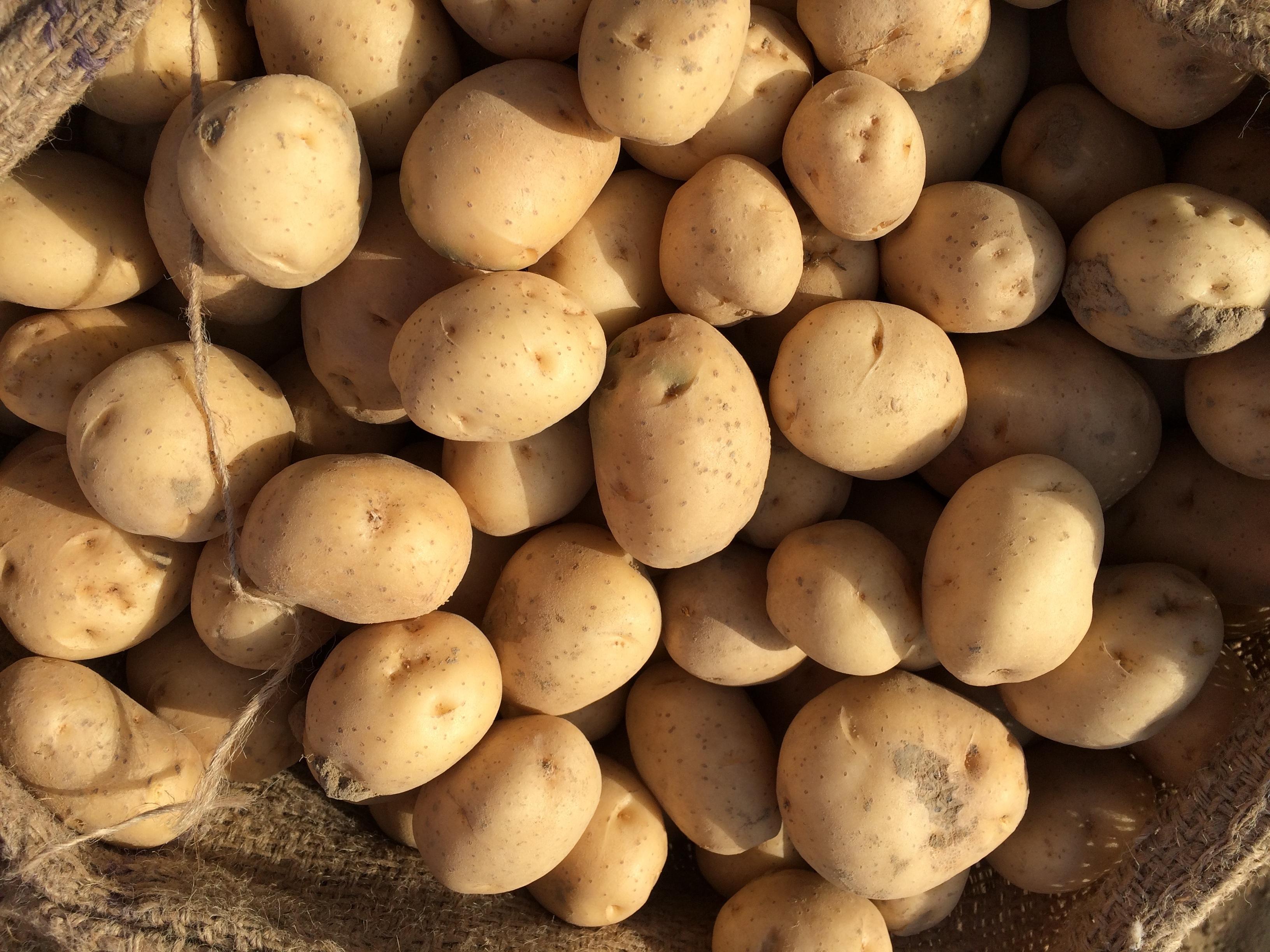 Kartoffel Bilder Kostenlos kostenlose foto lebensmittel produzieren gemüse frisch