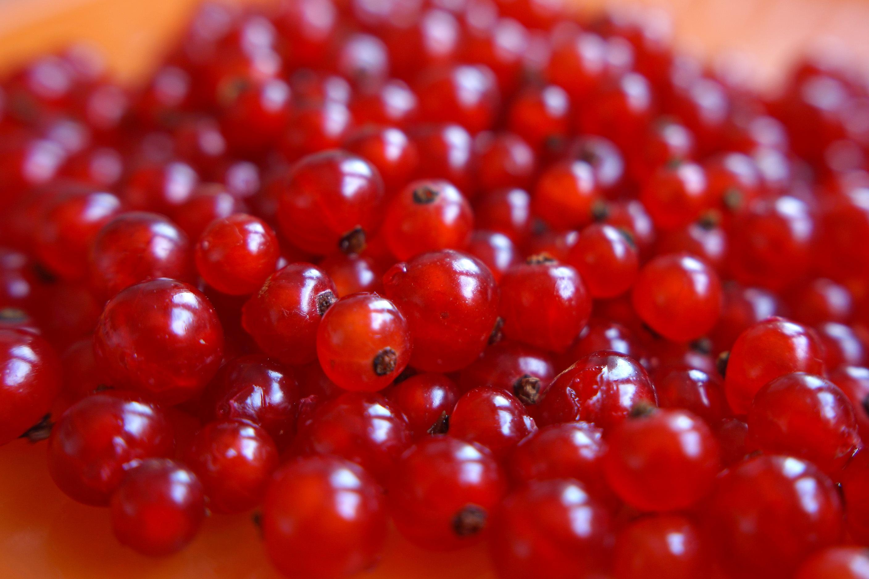 images gratuites fruit baie aliments rouge produire la m re canneberge arbuste fruits. Black Bedroom Furniture Sets. Home Design Ideas