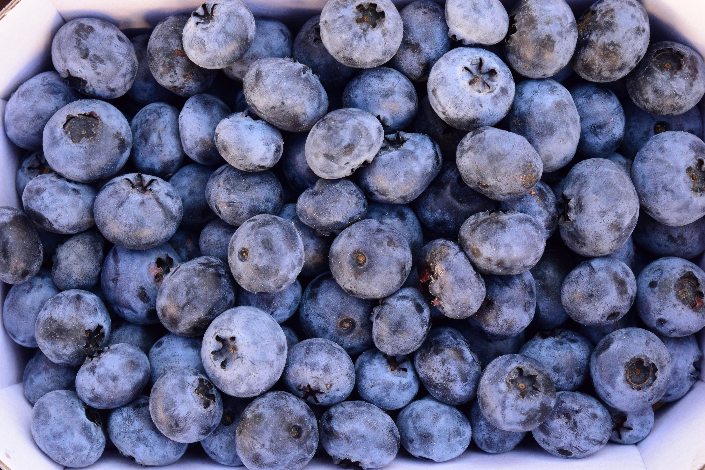 free images summer food produce blueberry market blue